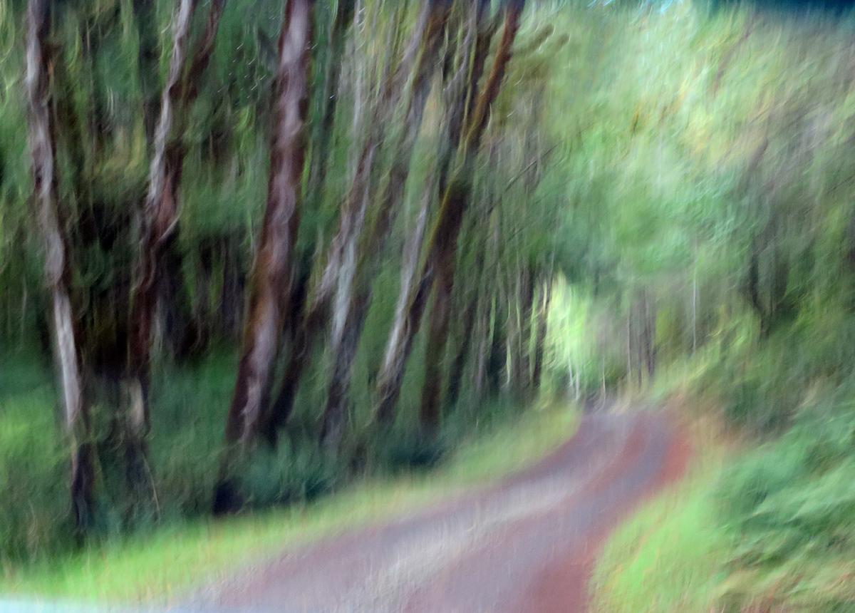 Mara Zaslove_Through the Woods.JPG