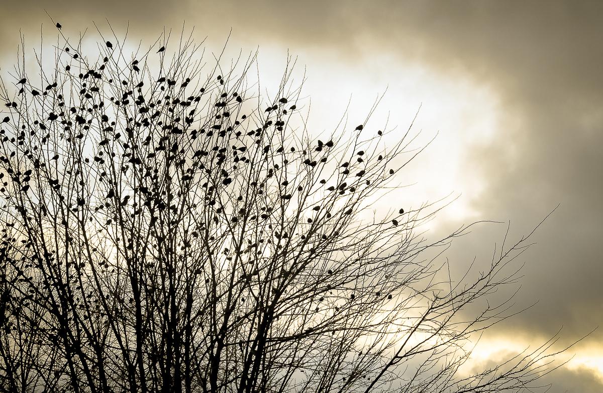 Roma Donovan_Many Birds.jpg