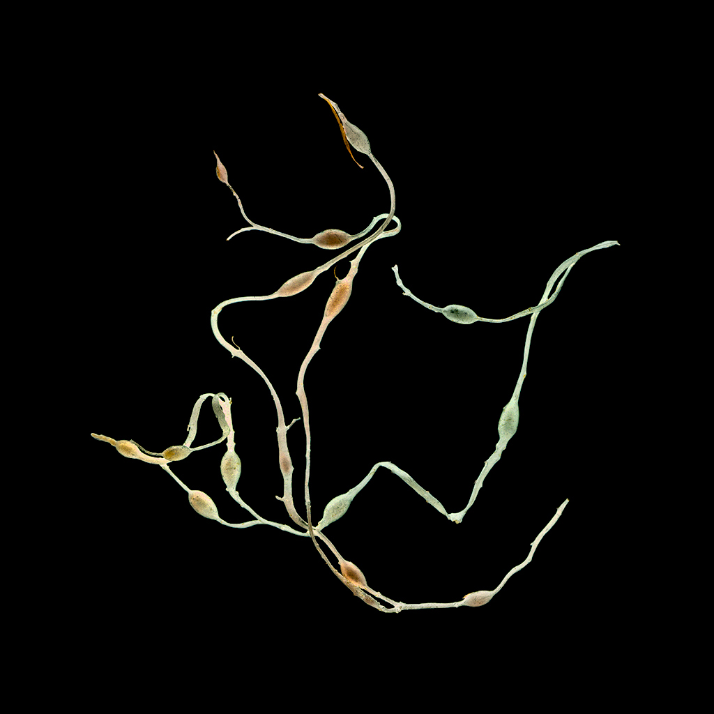 Linda Briskin_aqua botanica (v).jpg