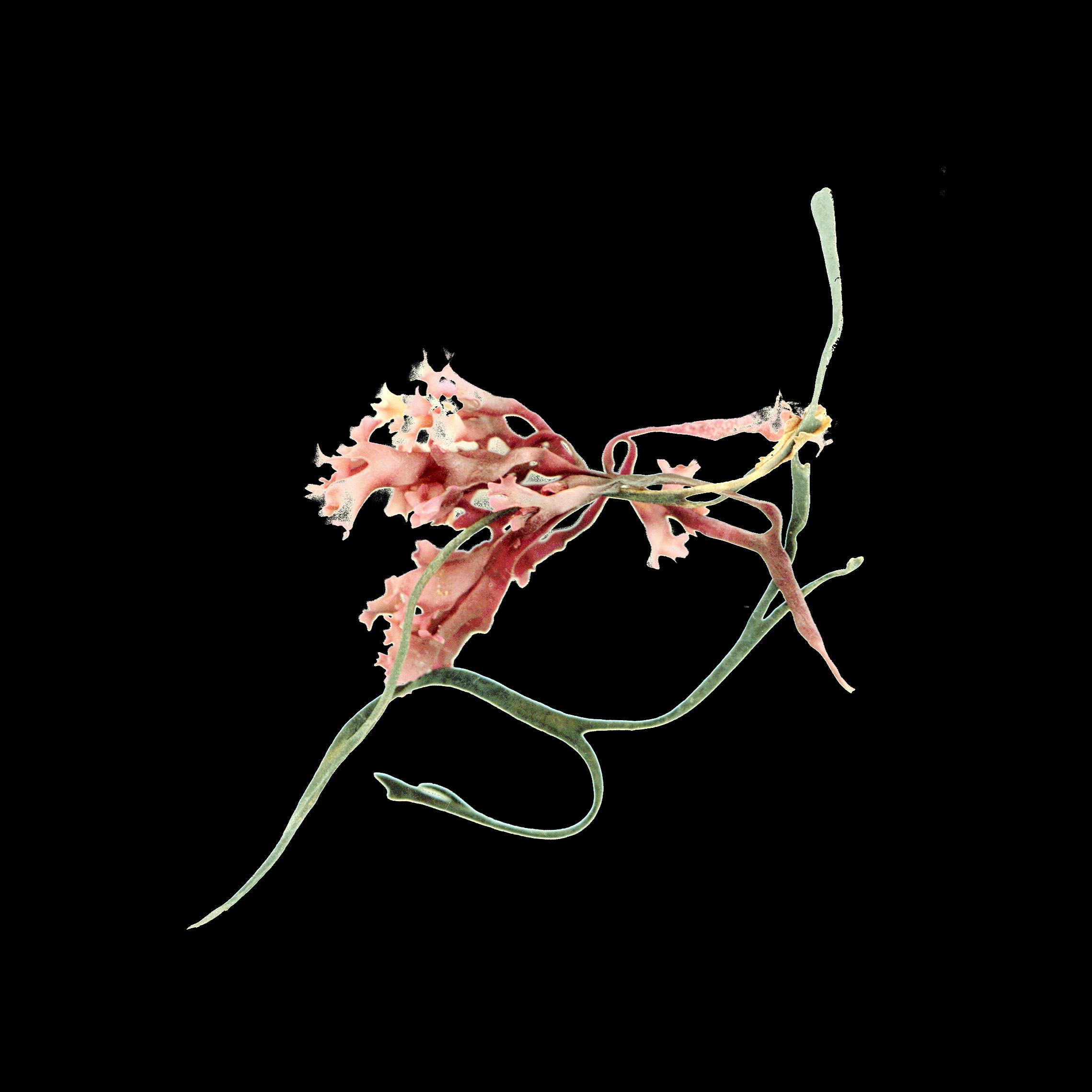 Linda Briskin_aqua botanica (ii).jpg