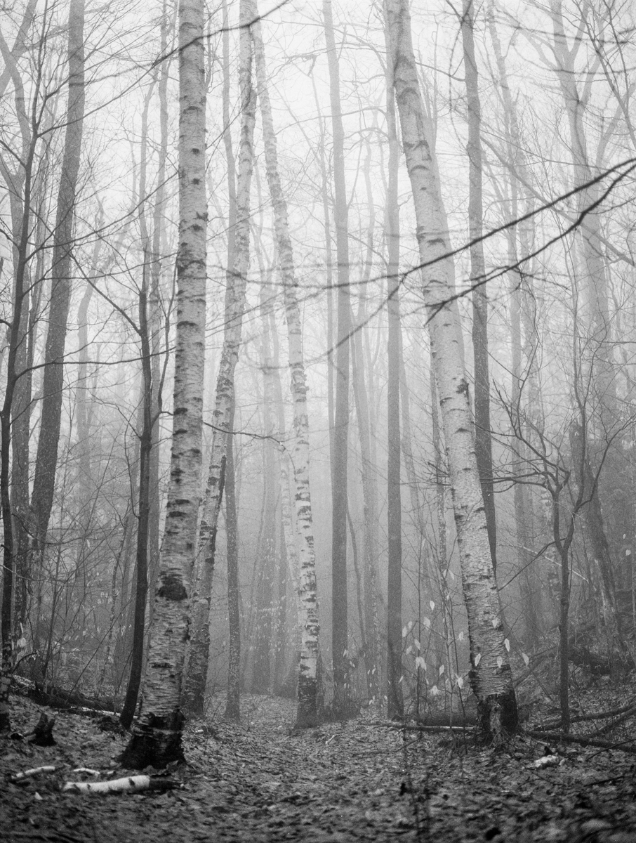 Megan Haley _ Trees Part II _ Veiled.jpg