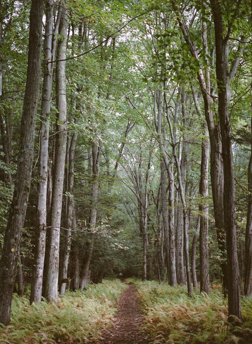 Megan Haley _ Trees at the Audubon _ The Path.jpg