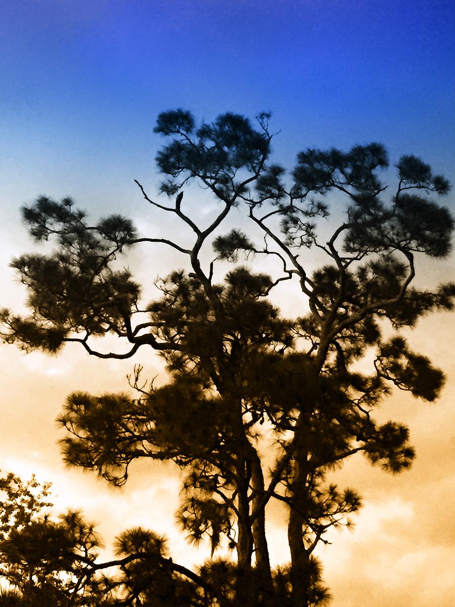Mia Wisnoski_Eleanor's Tree.jpg