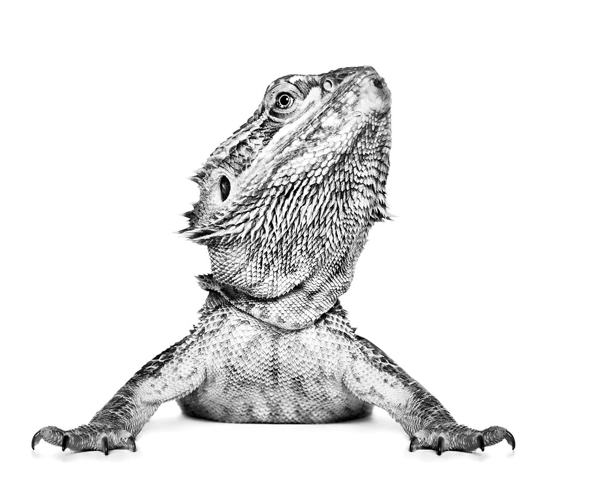 CearnsAlexandra_Reptilian.jpg