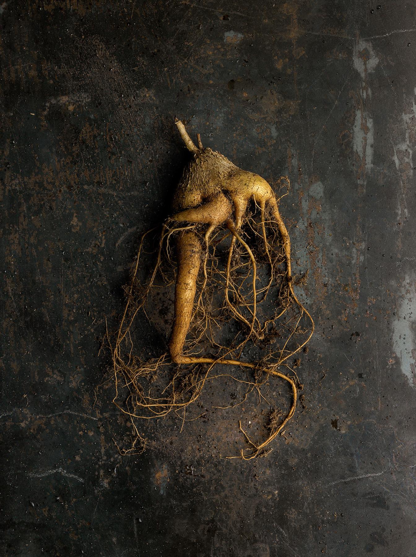 52_Beth_Galton_Roots_Wild_Ginger_1.jpg