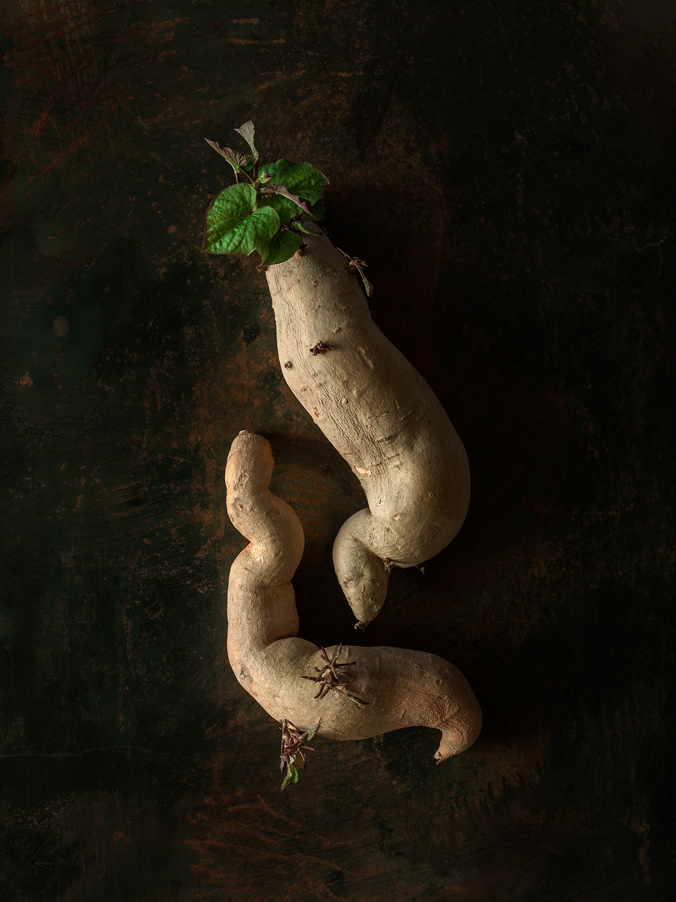 Beth_Galton_Amour_de_Pomme_de_Terre_Fingerlin_Sweet_Potato_6_4days_5.jpg