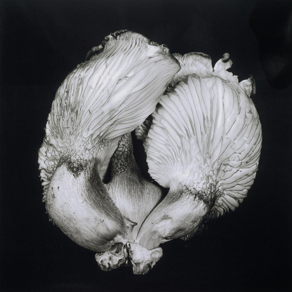 Dale M_Reid_Dejeuner_Oyster Mushroom 44_1.jpg