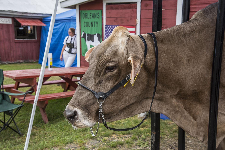 Steven_Edson_The County Fair_07.jpg