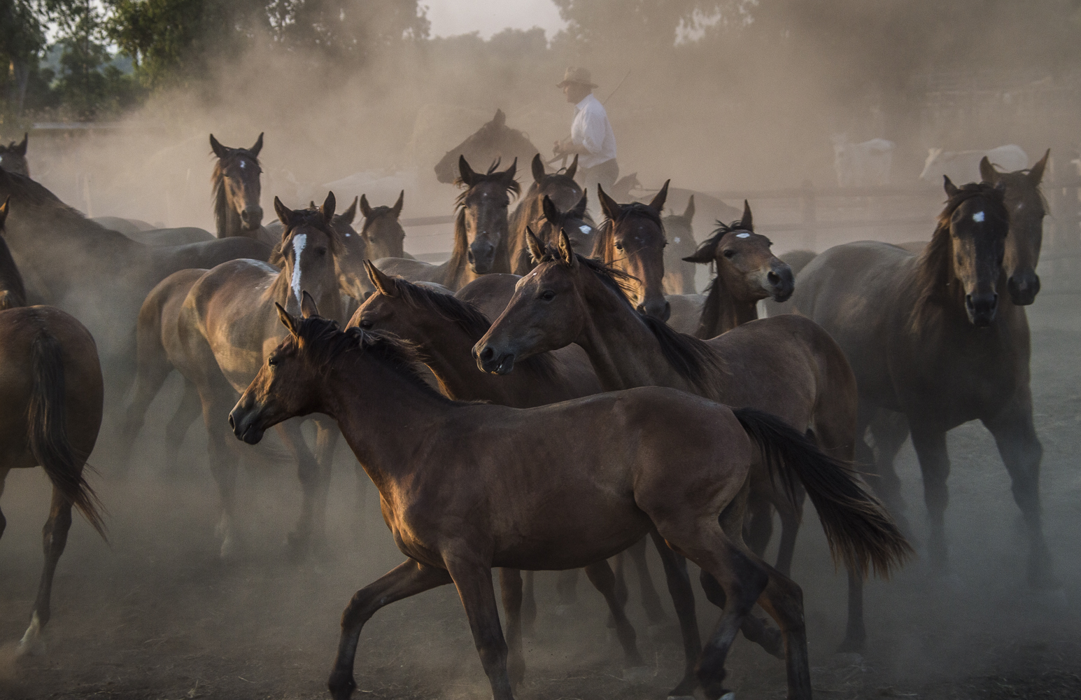 Gabrielle_Saveri_Italian Cowboys of Maremma_Buttero Herding Foals.jpeg