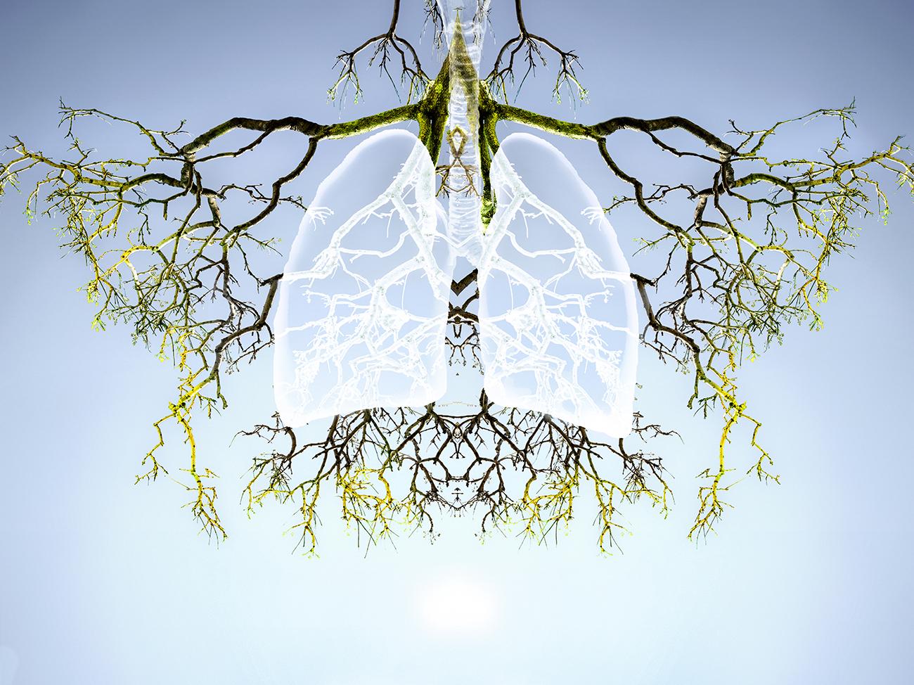 Karin_Hauser_ Beneath The Canopy_#9a.jpg