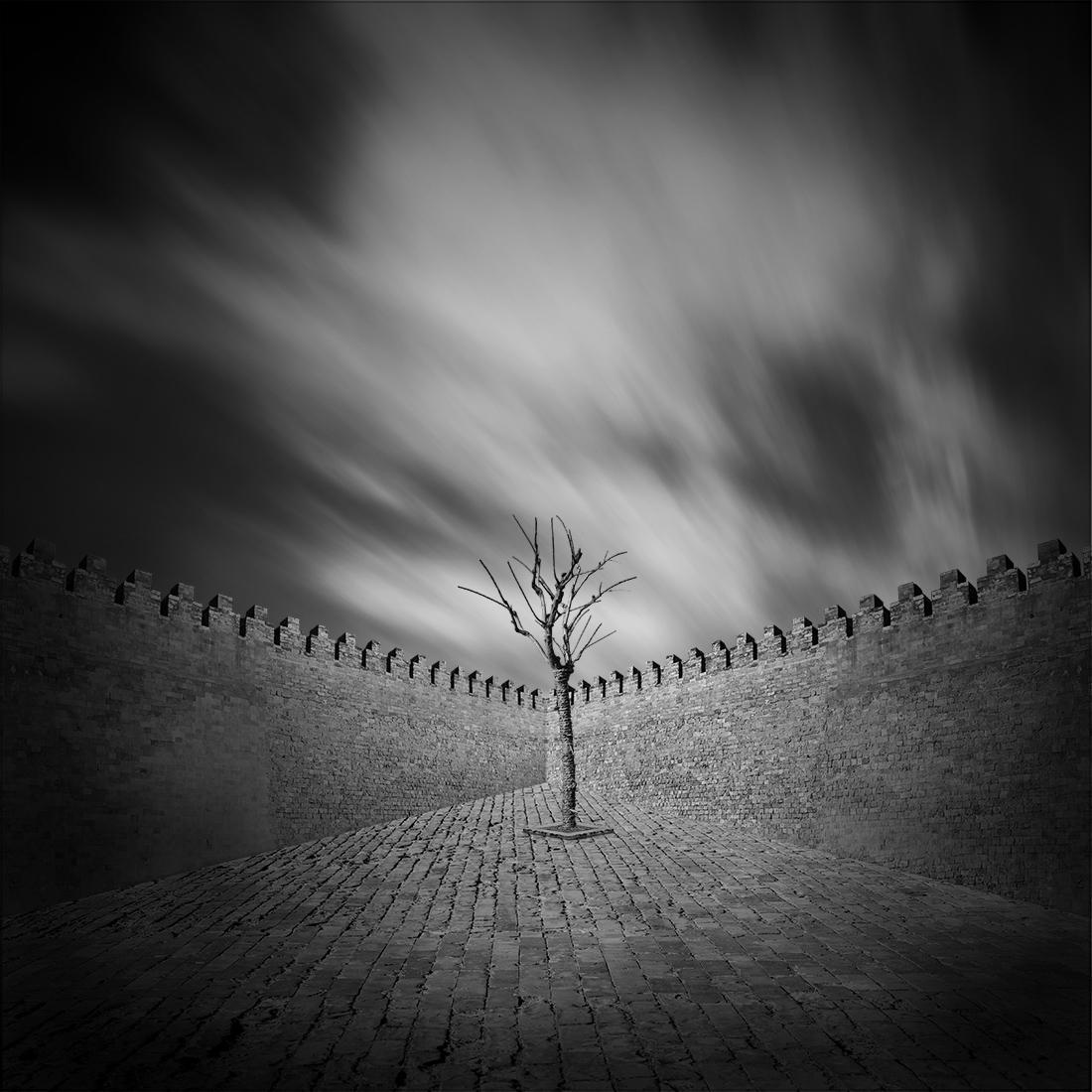 Tree of life by Hasibe Borhani (5).jpg