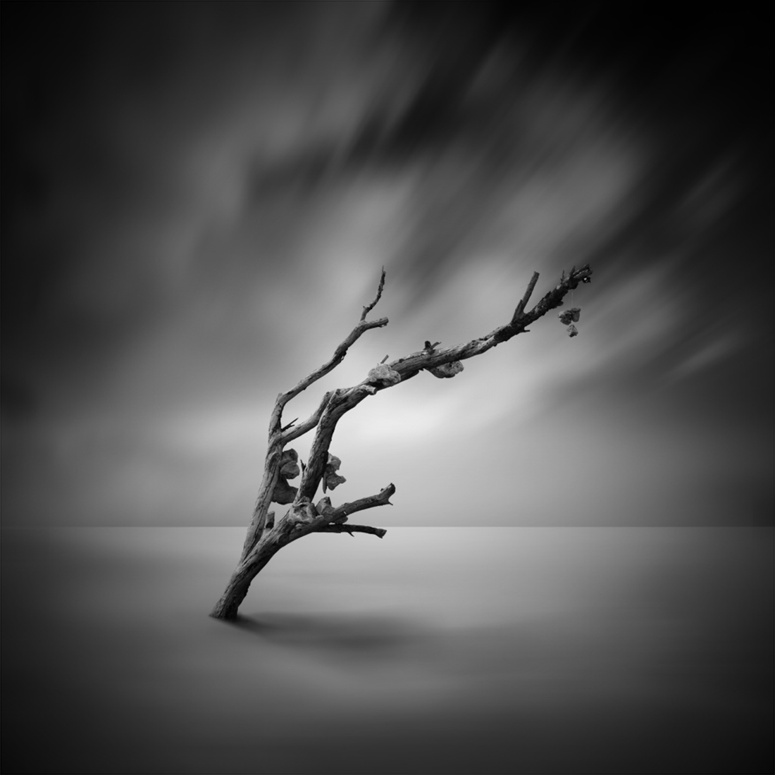 Tree of life by Hasibe Borhani (10).jpg