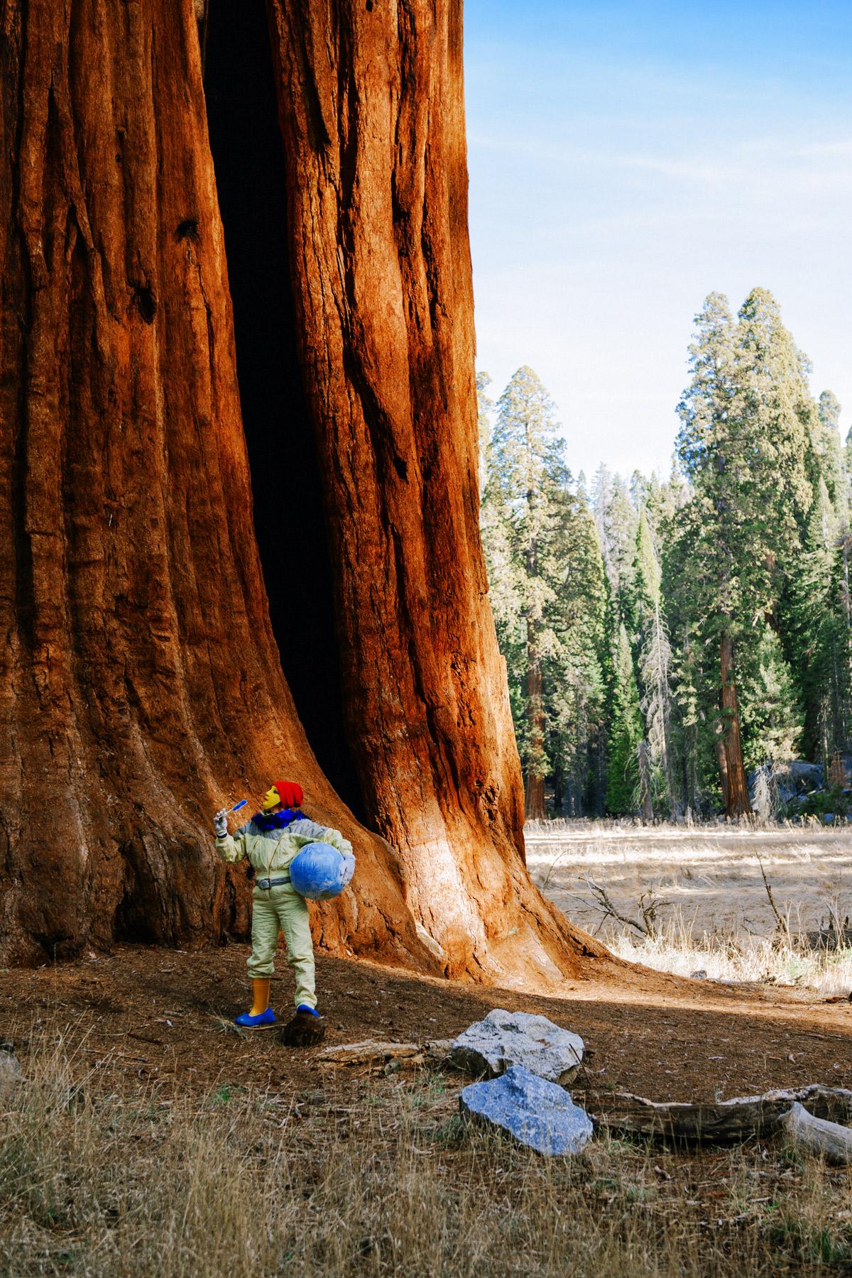 tabea_simple_bigdreamamerica_sequoia_03.jpg