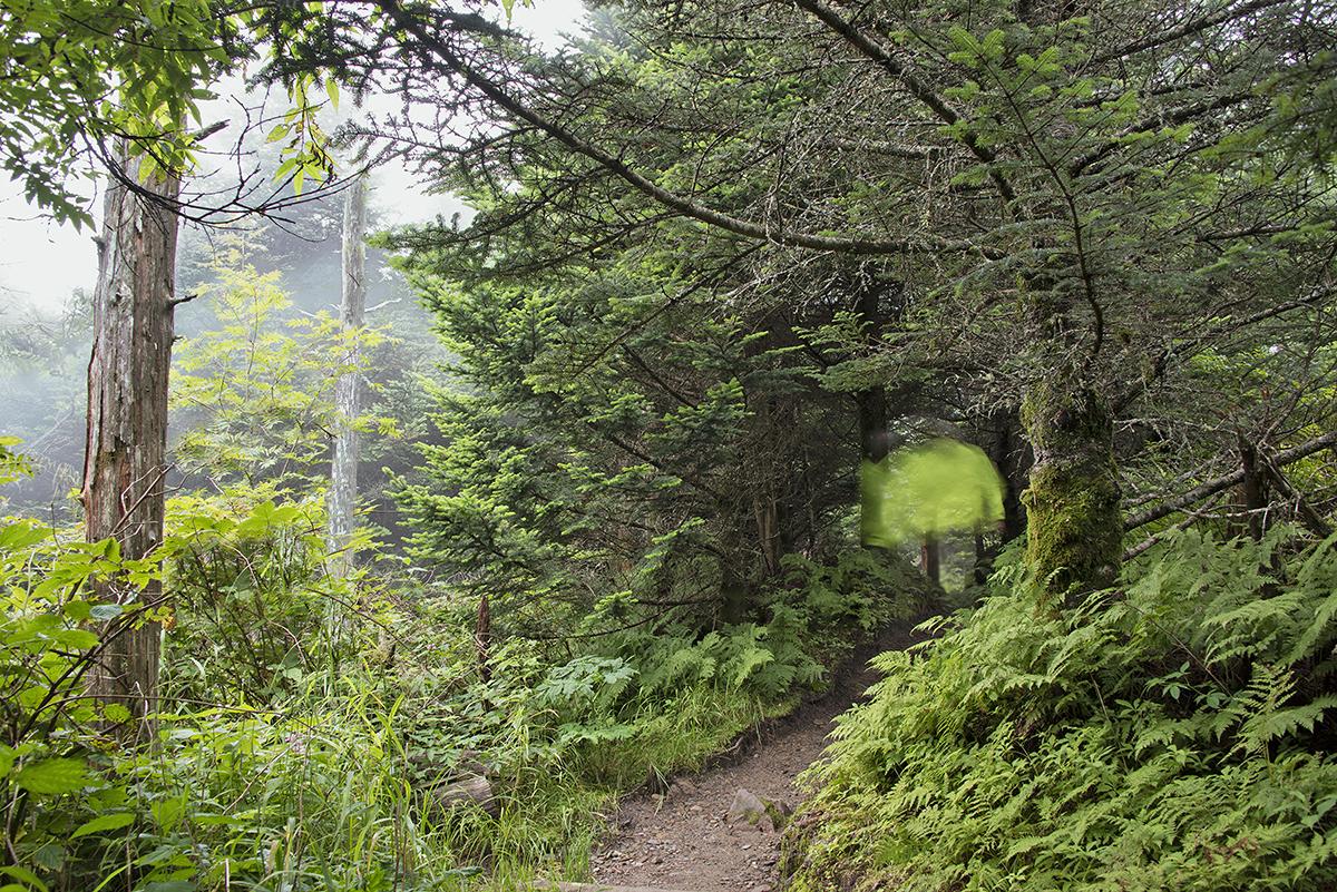 Vicki_Provost_A Walk in the Woods_Appalachian Trail_6.jpg