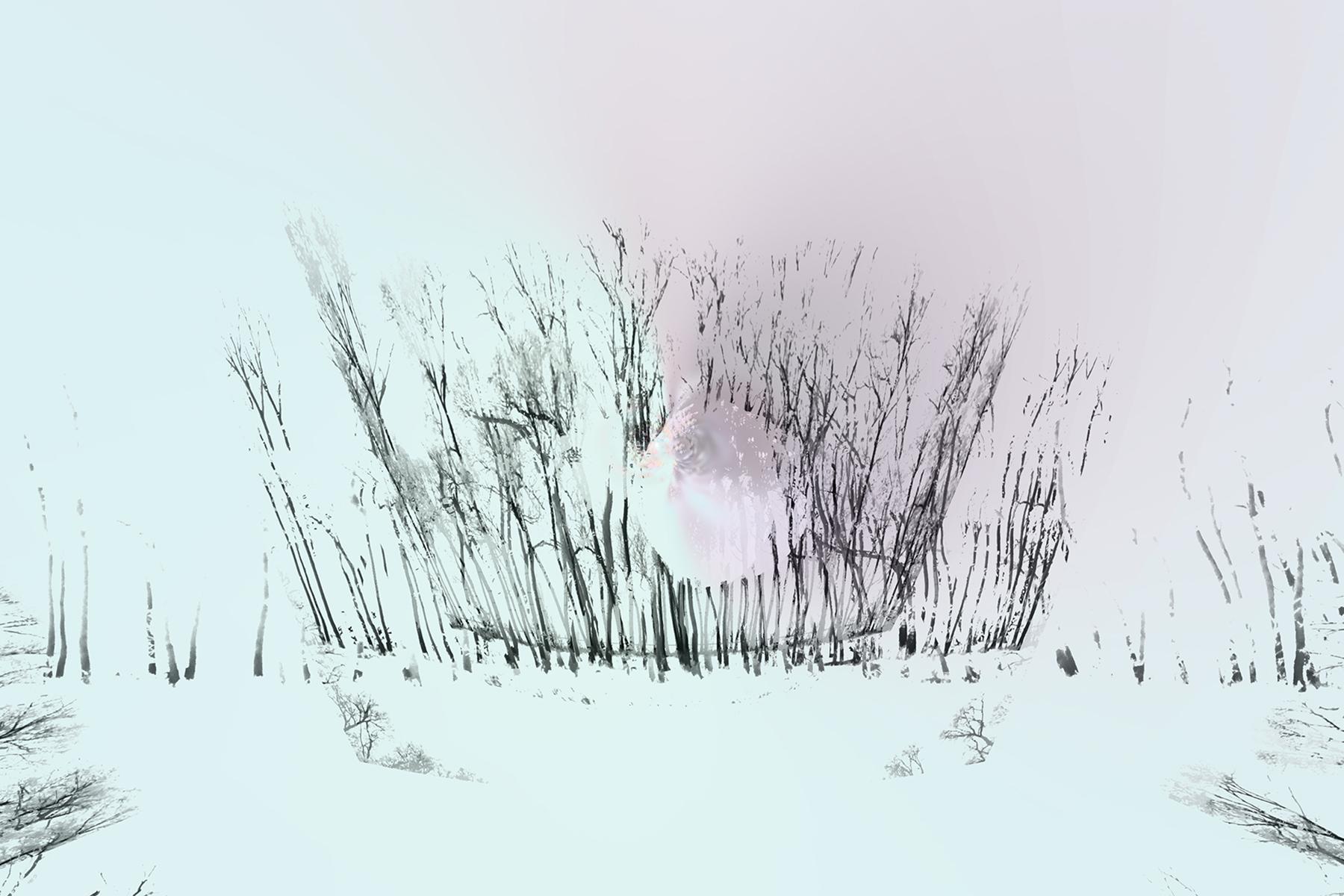 Elaine Hunter_ Saskatchewan Trees_ 4_ 4.jpg