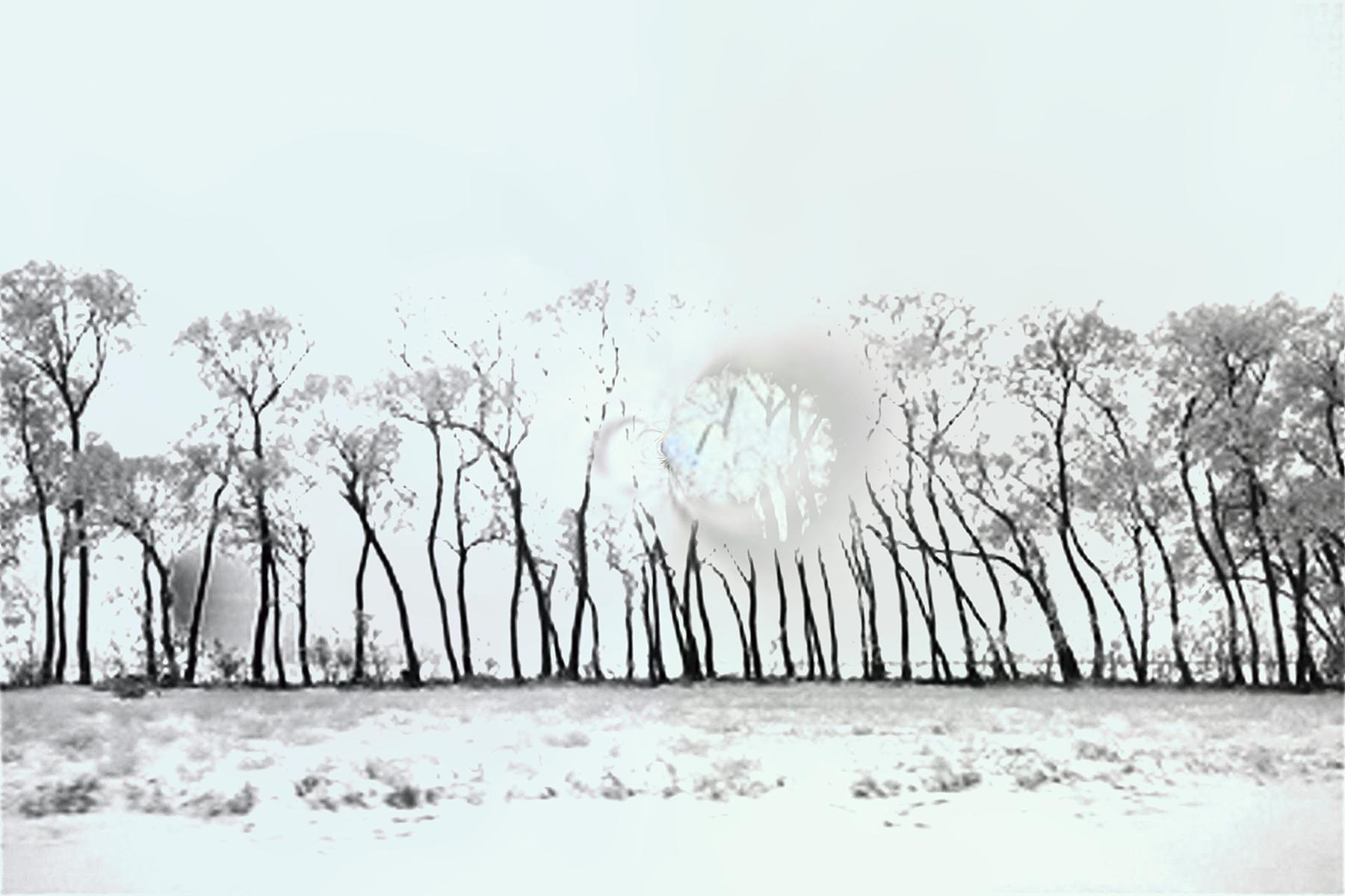 Elaine Hunter_Saskatchewan Trees_6_6.jpg