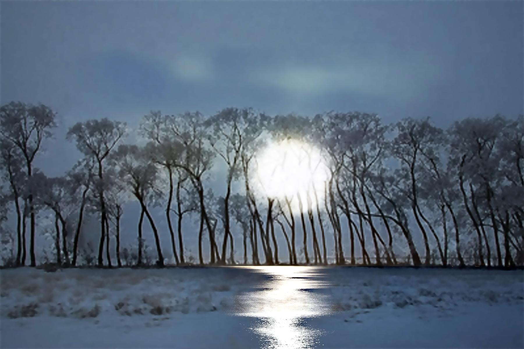 Elaine Hunter-Saskatchewan Trees_1_ 1.jpg