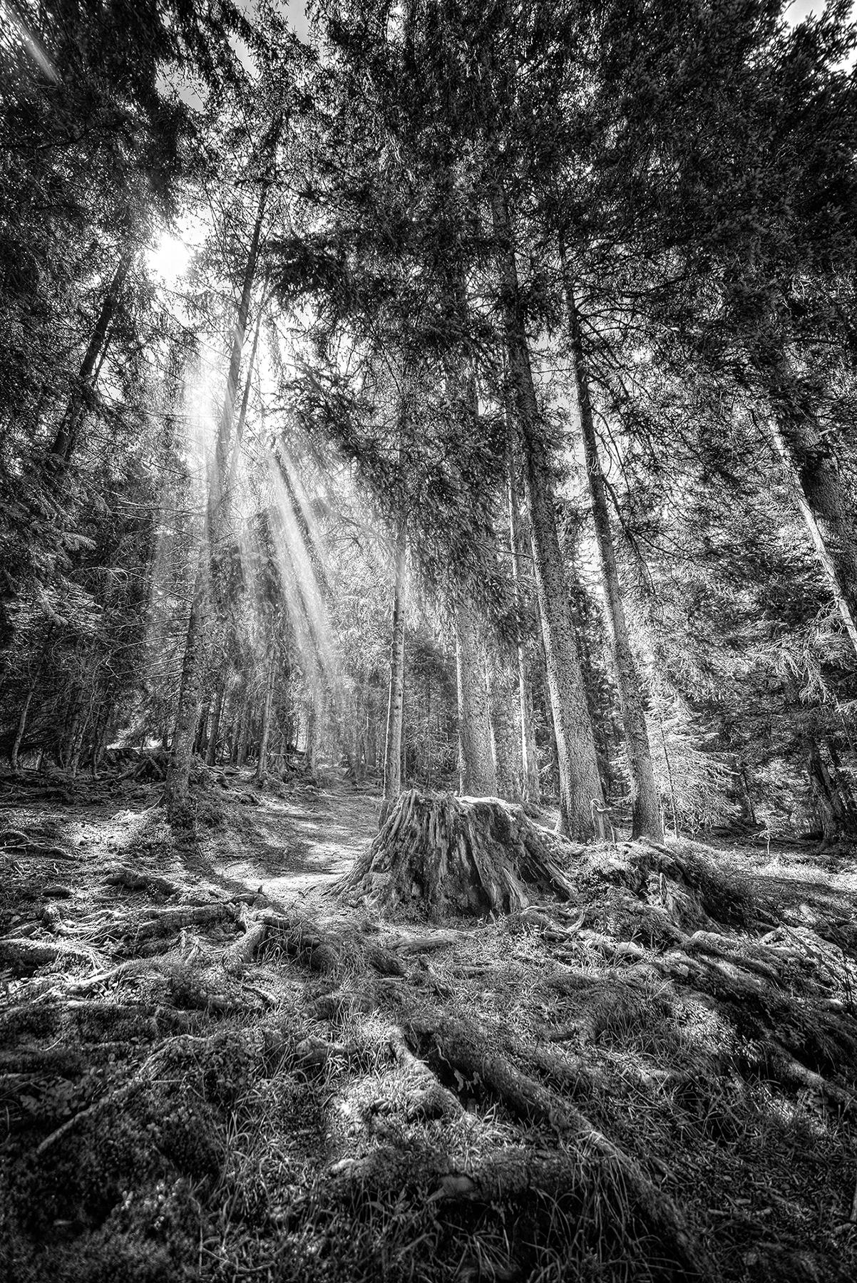 Jochen_Brillowski_Trees_TreeI_1.jpg