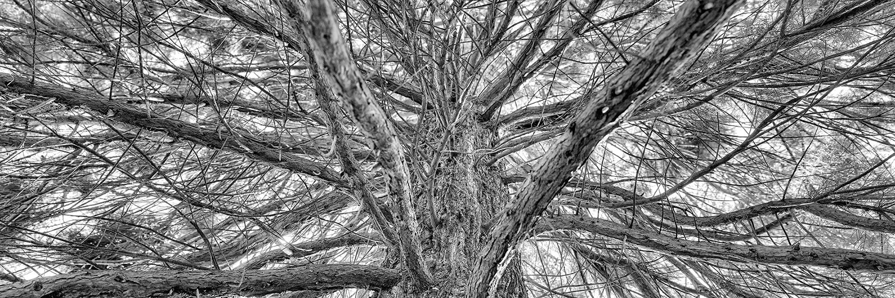 Jochen_Brillowski_Trees_TreeIII_3.jpg