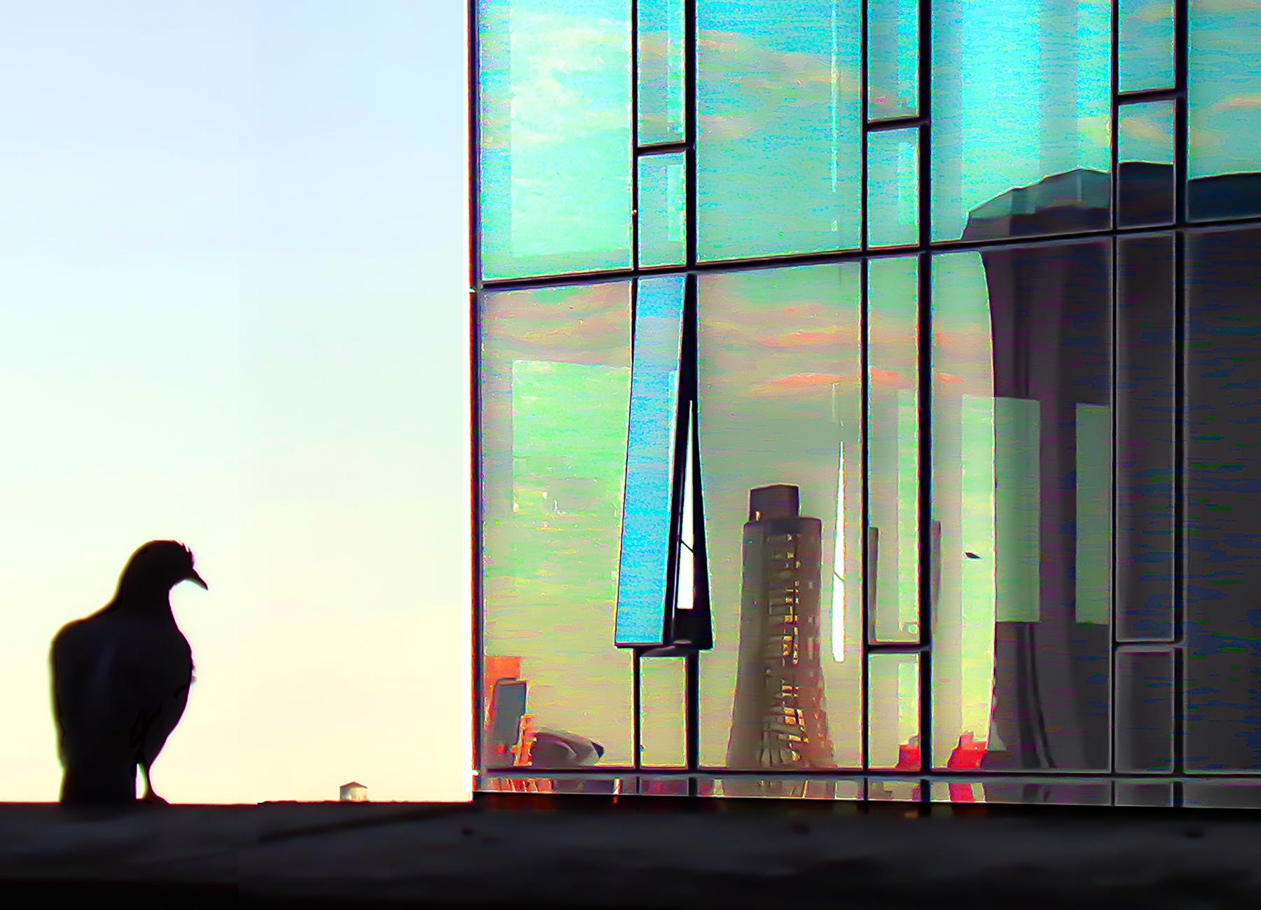 Shifra_Levyathan_Bird and reflection.jpg