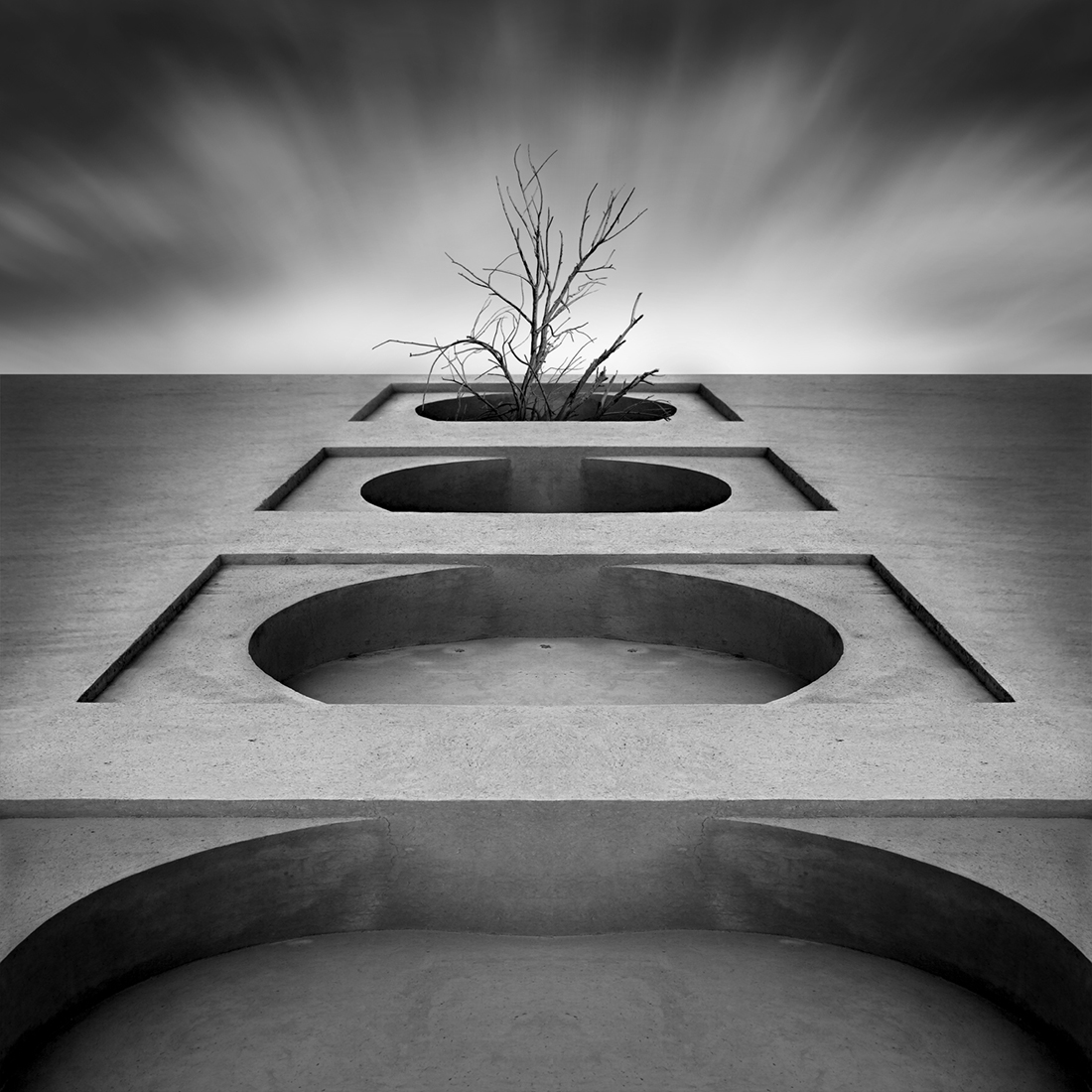 42_Tree of life by Hasibe Borhani (6).jpg