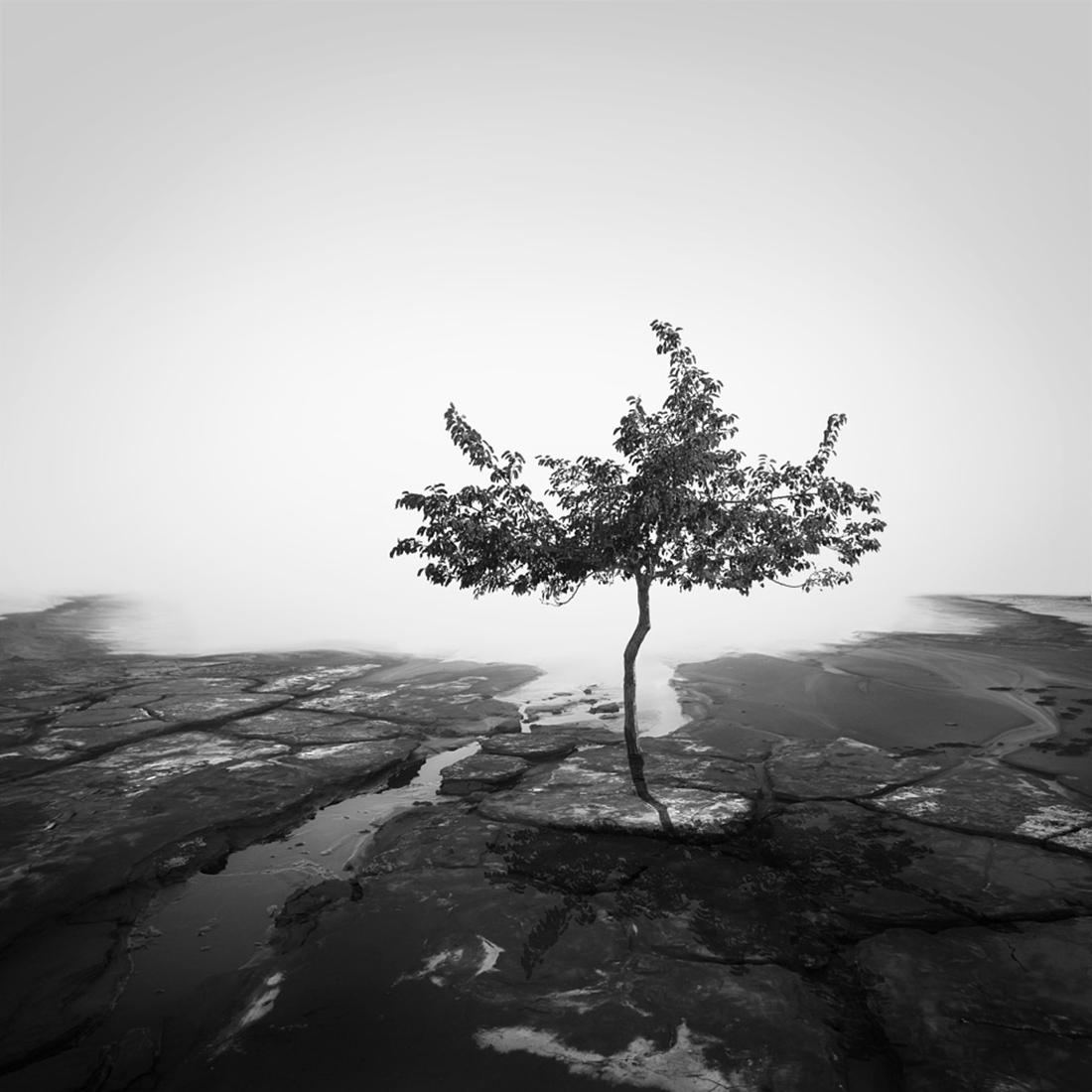 42_Tree of life by Hasibe Borhani (8).jpg