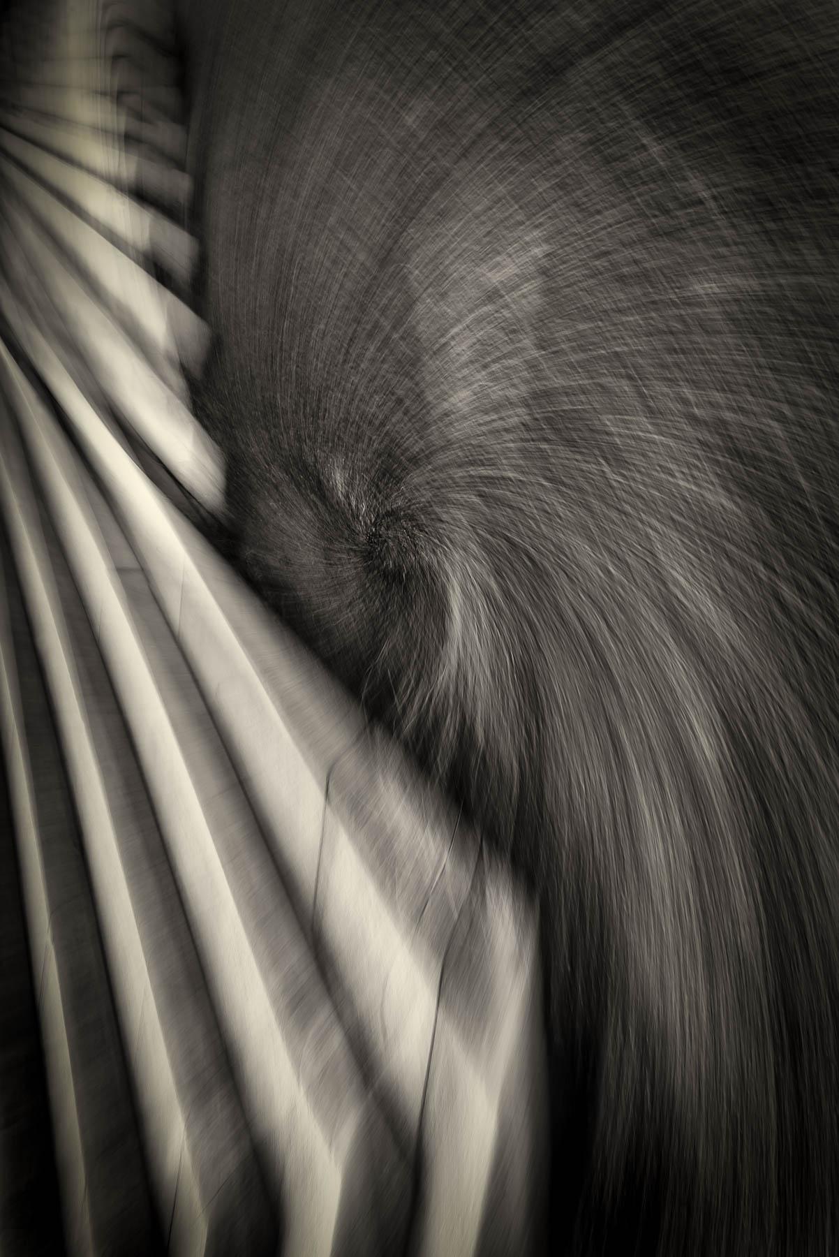 DUTCH_Bagley_Line Waves_Line Up 25_3.jpg