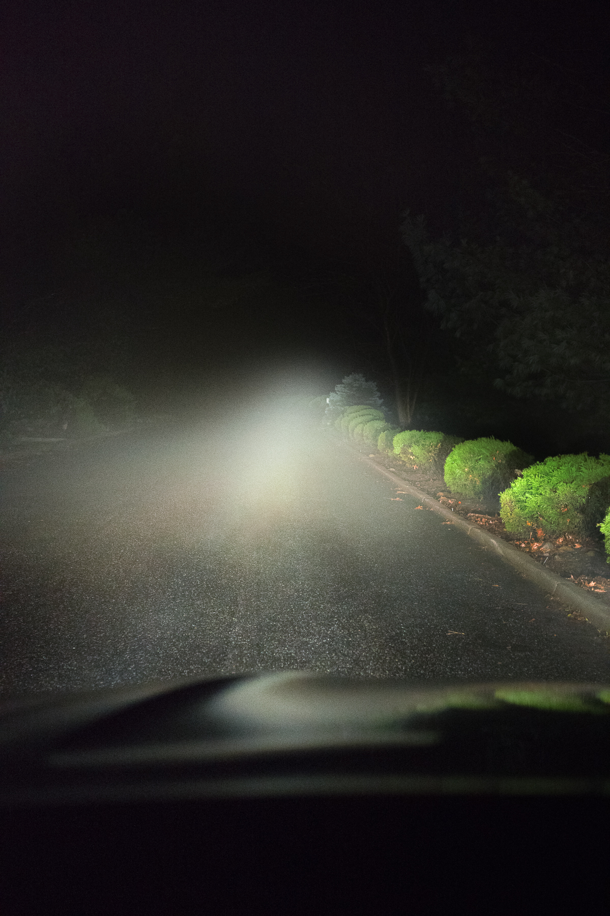 JOANN_CHAUS_THIS-IS-HERE_NIGHT-FOG_2.jpg