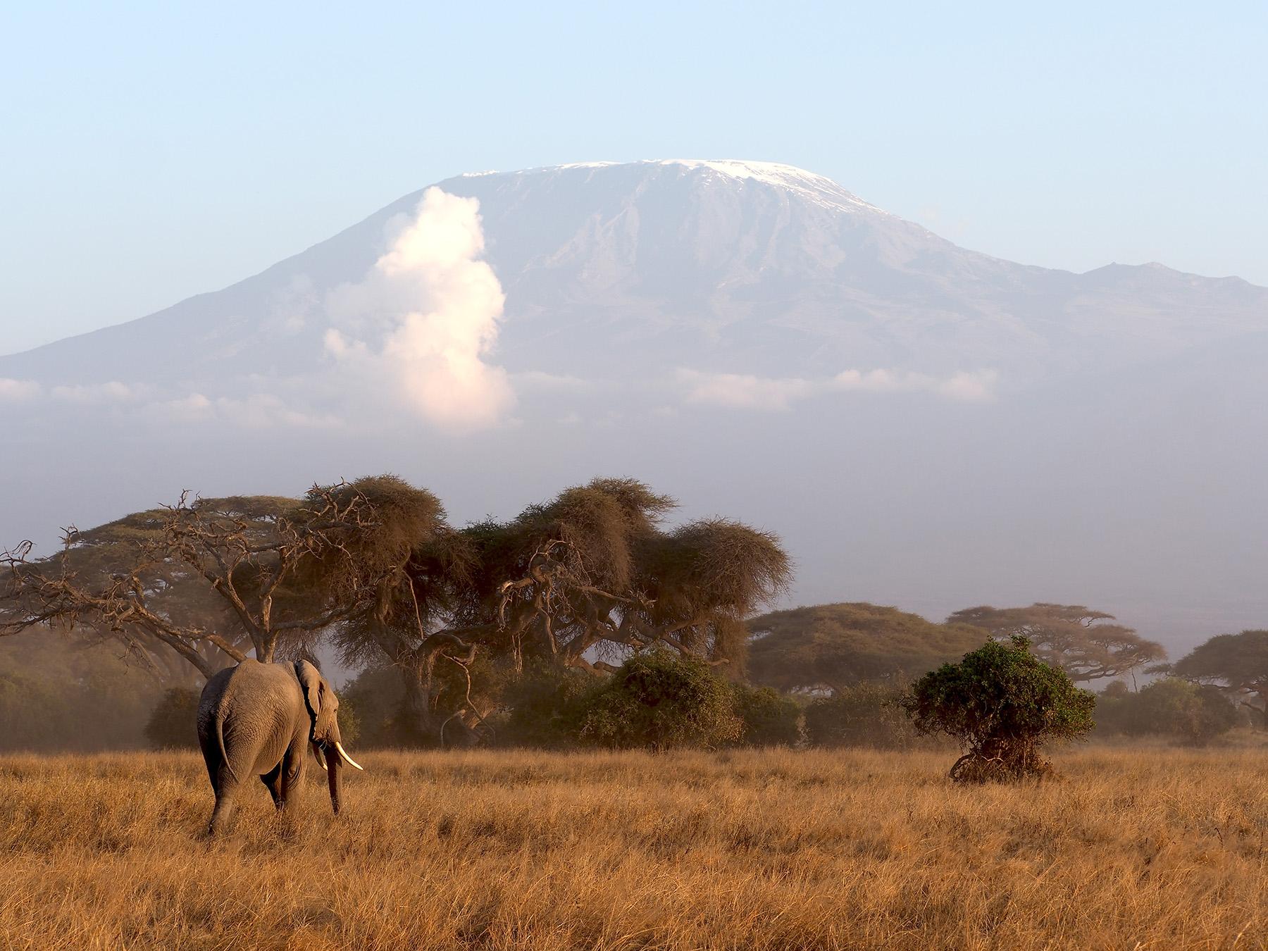 Ranjan_Ramchandani_Elephantsof Amboseli_Home bound.jpg