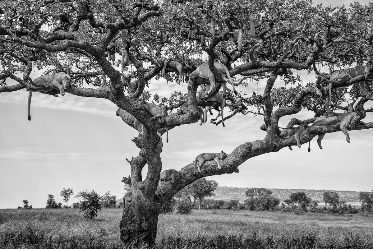 Xtina_Parks_lion tree.jpg