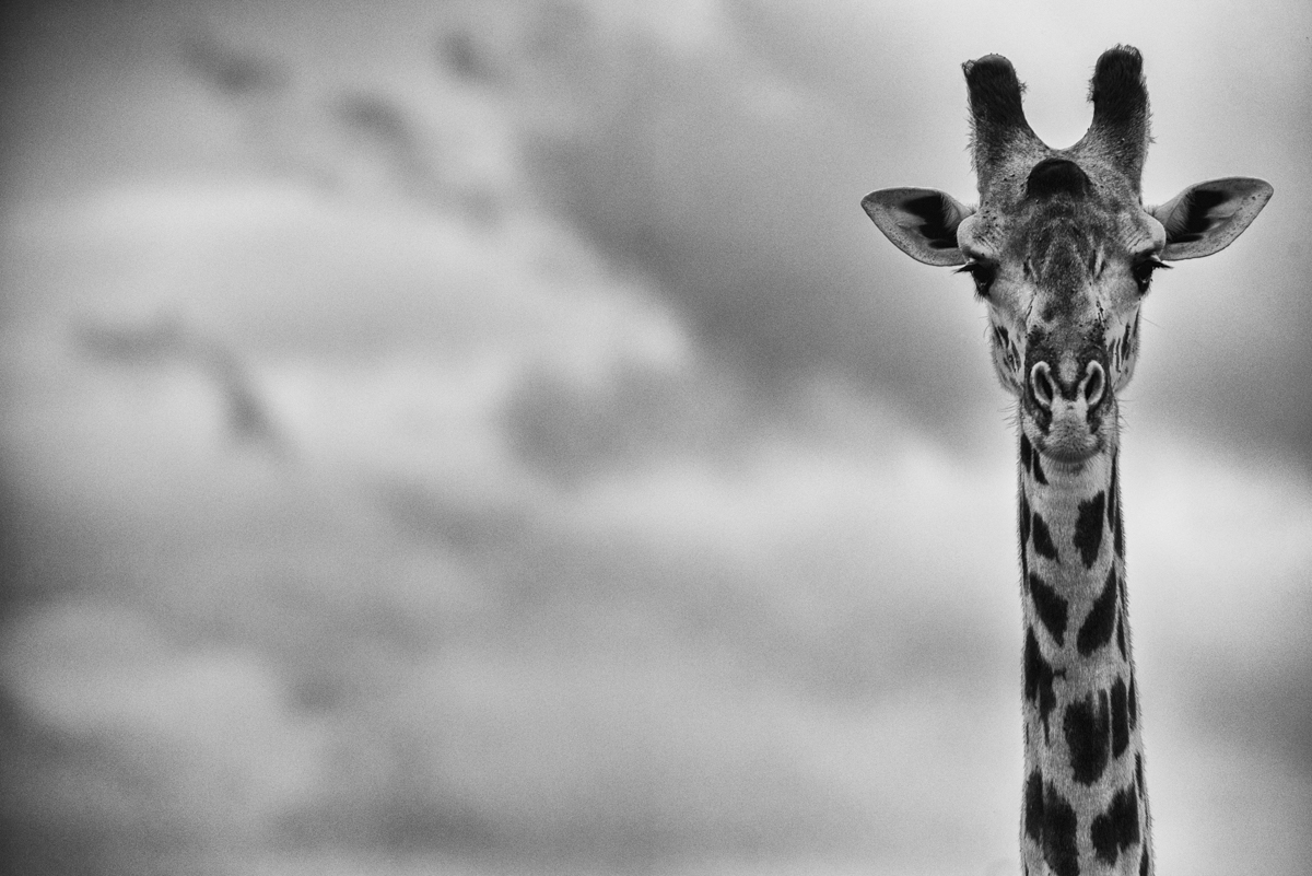 Xtina_Parks_roaming tall.jpg