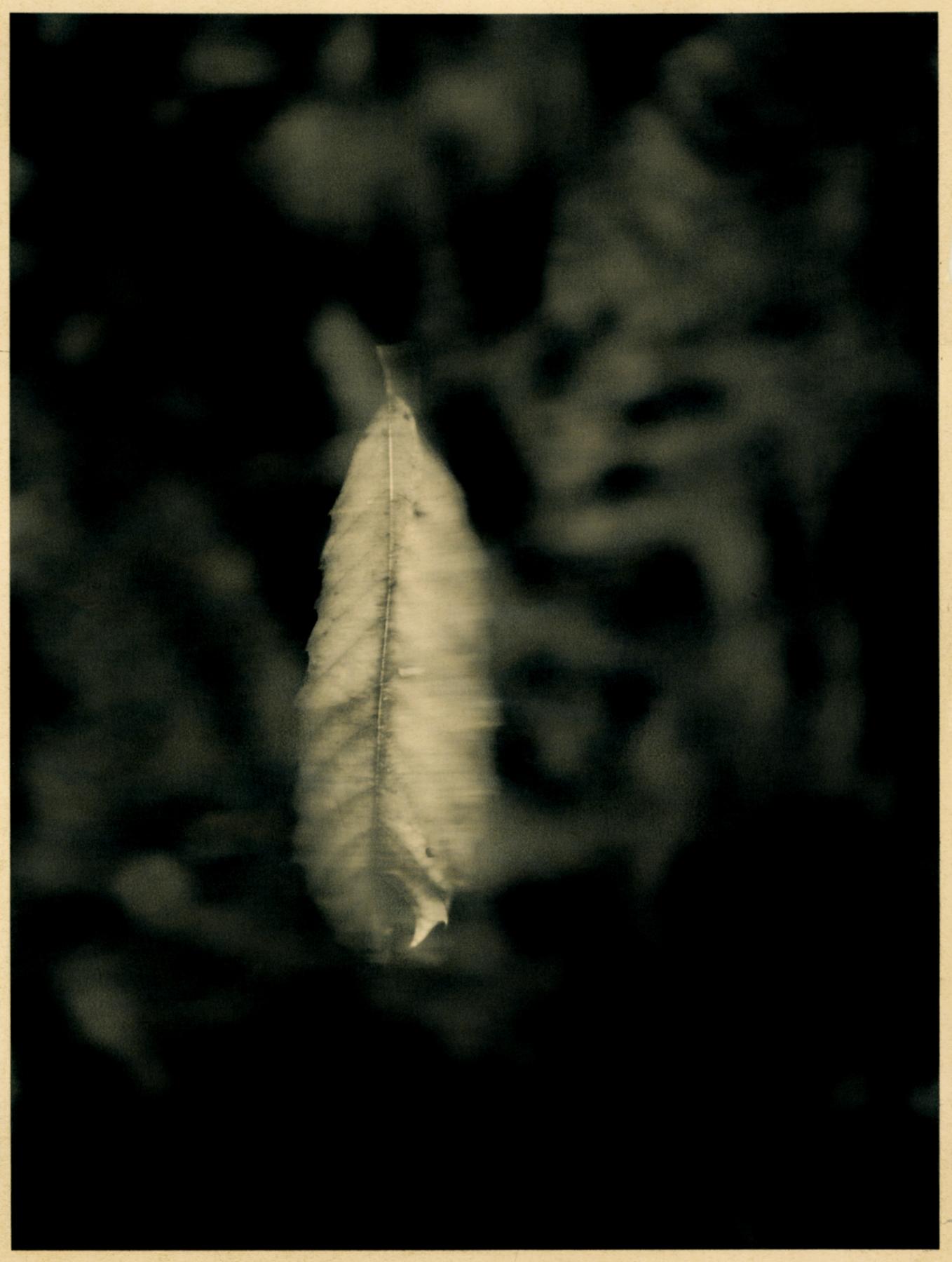 Rhonda_Lopez_Liable to Disappear_Falling_2.jpg