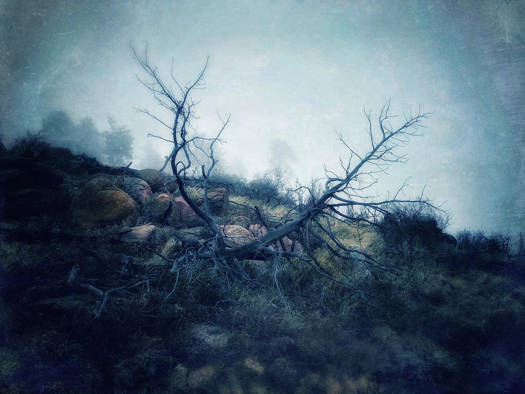 Kate_ZariRoberts_Ghost Tree.jpg