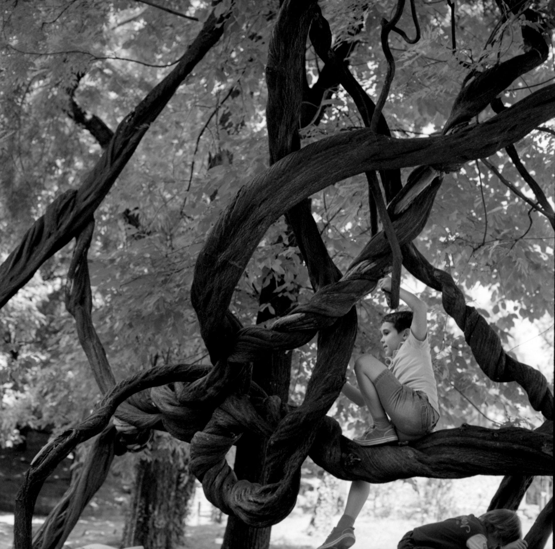 Margrieta_Jeltema_the shaded gardens of Bucharest_6.jpg