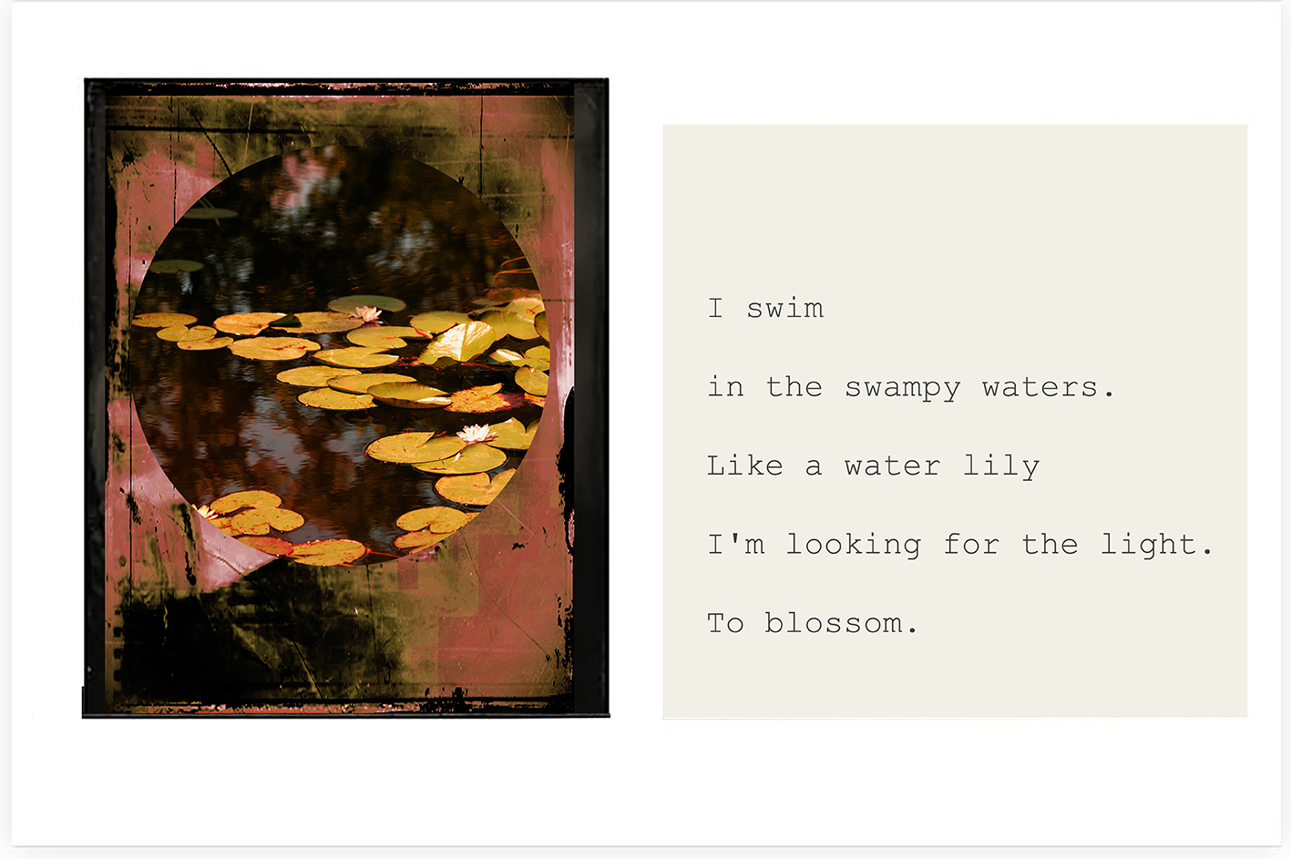 Monica_Gorini_Like a water lily 3.jpg