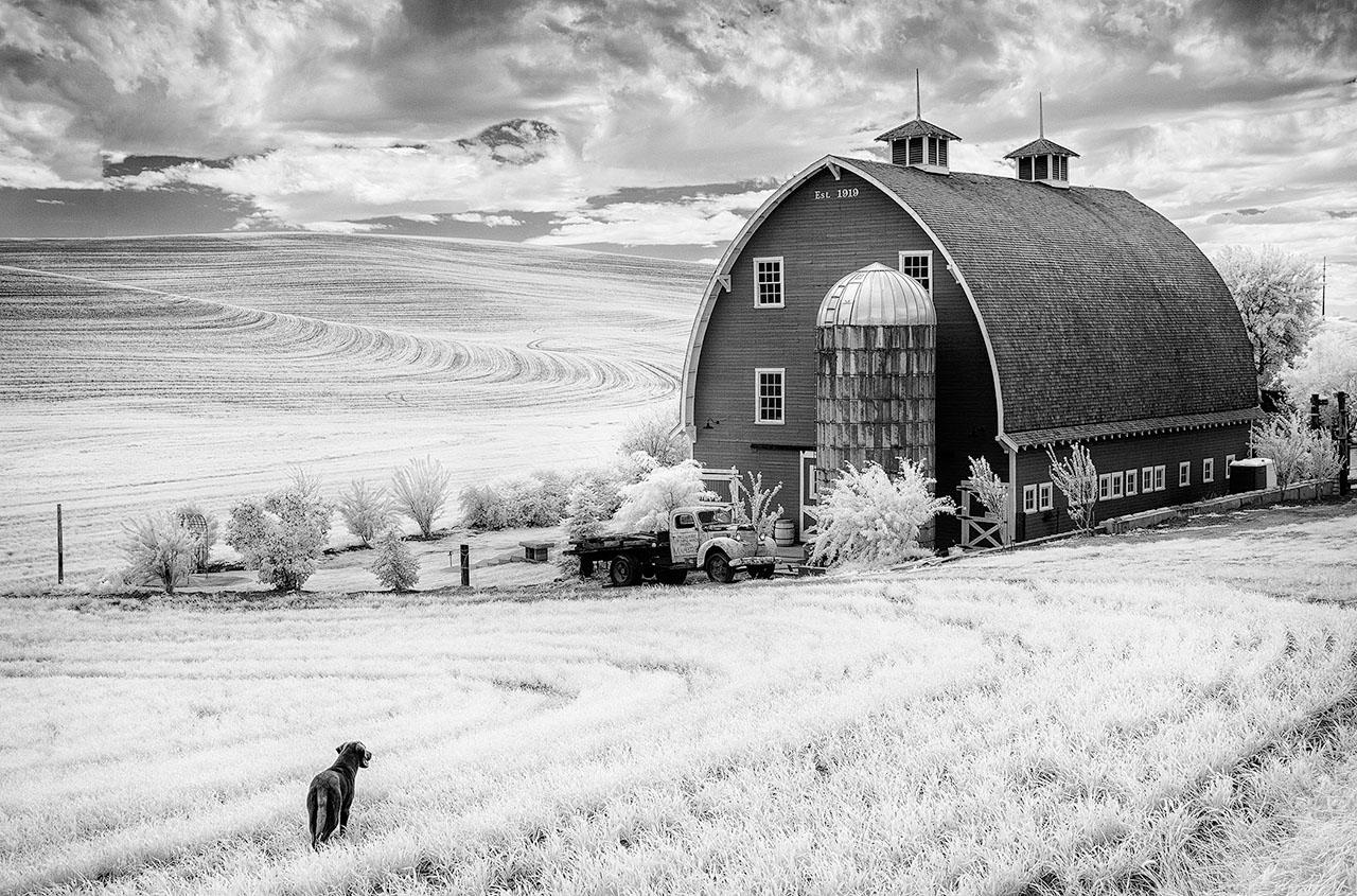 Beamie_Young_Palouse_The_Farm_Dog_06.jpg