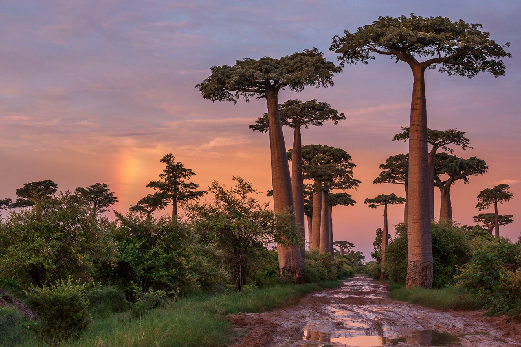 Cristina_Mittermeier_CGM_Madagascar_27075.jpg