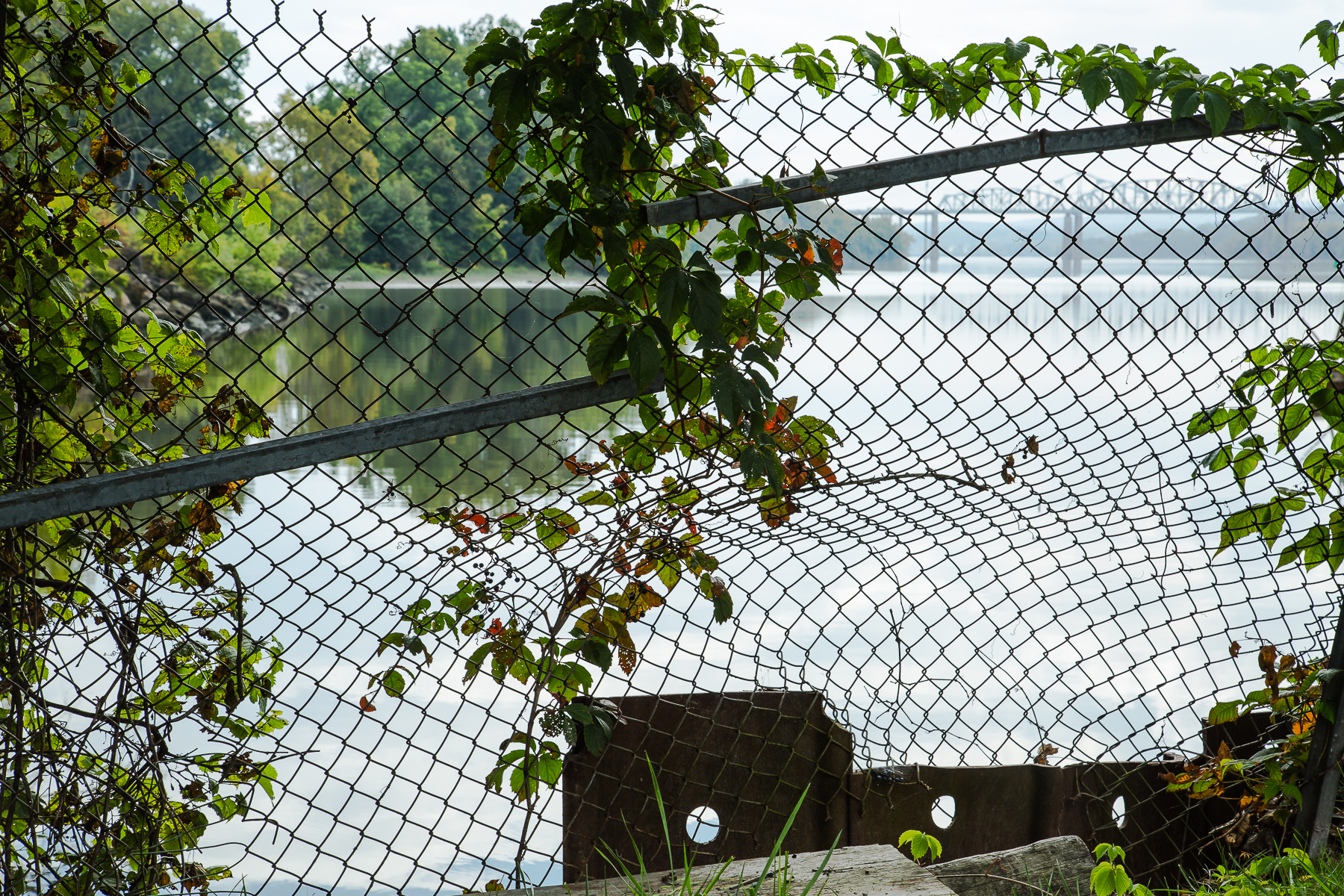 Gioia_Kuss_Native Vines and Safety Fencing.jpg