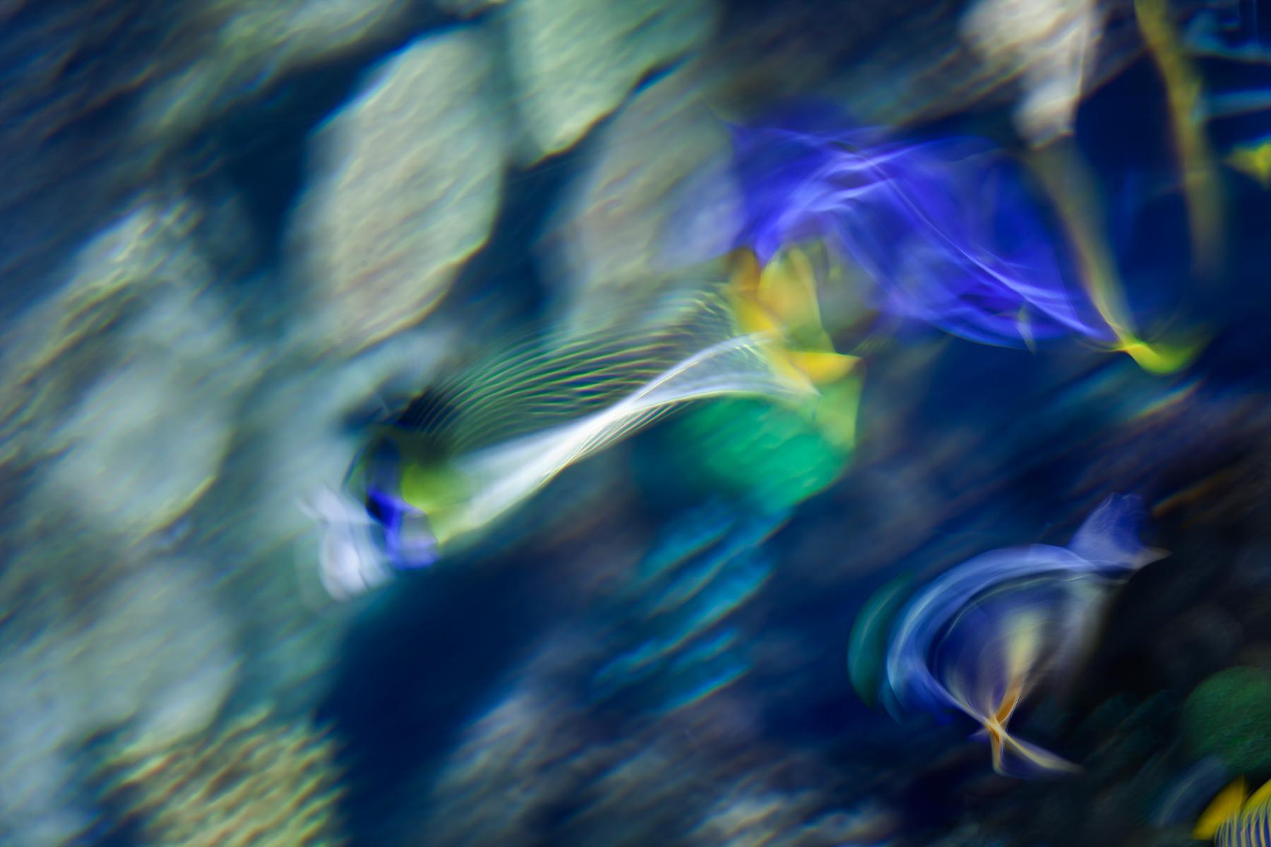 Cheryl_Rossum_Ocean Life_Coral Reef_2.jpg