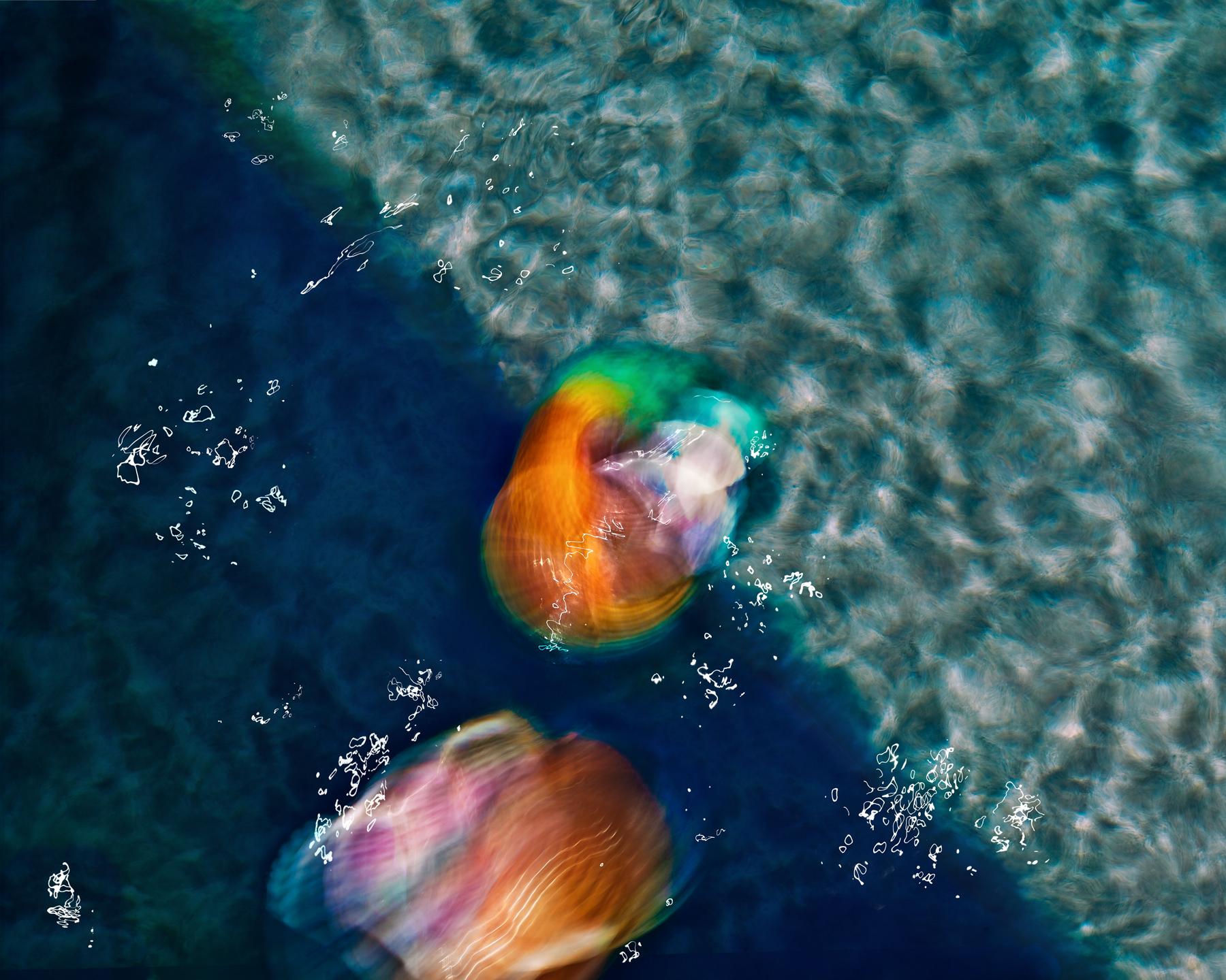 Cheryl_Rossum_Ocean Life_Tonna Coming Ashore_1.jpg