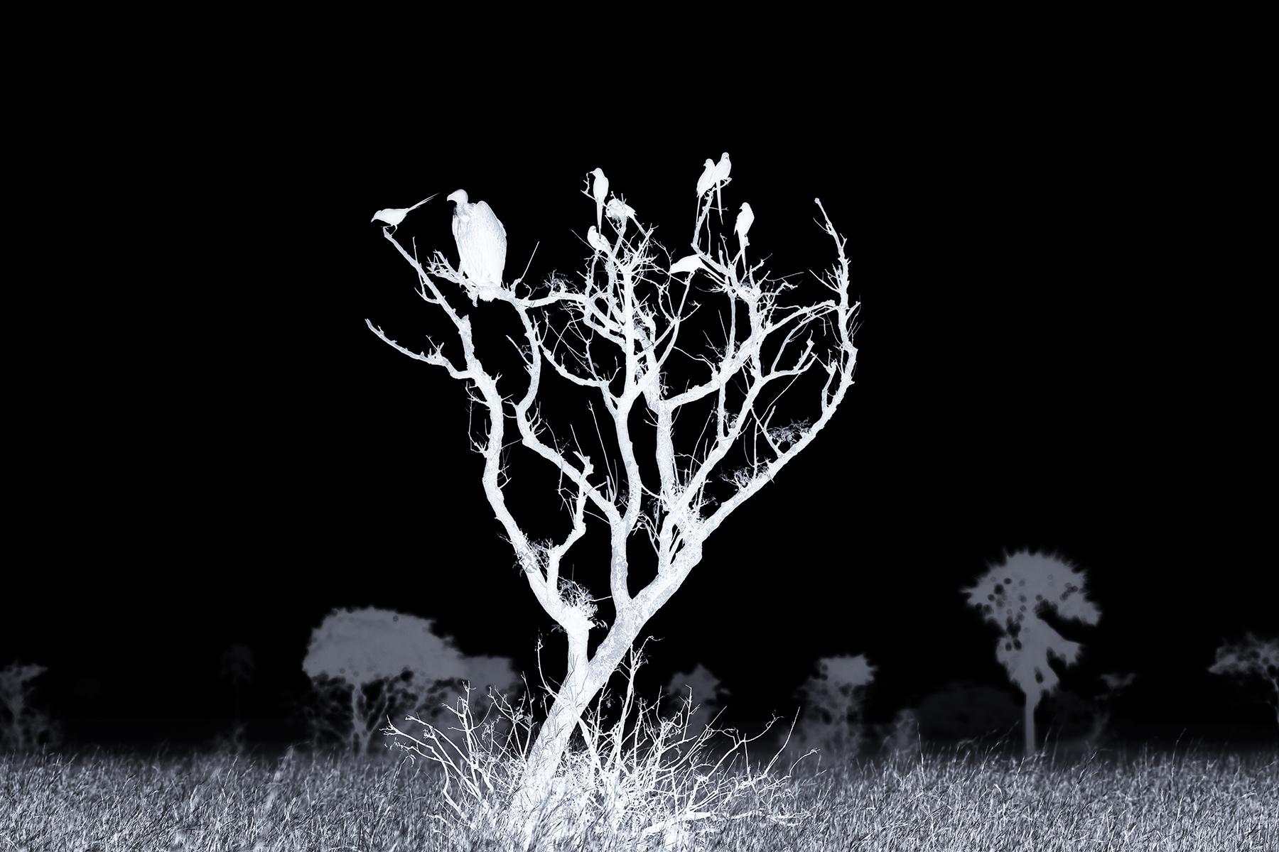 Lennette_Newell vulture bird skelton tree.jpg