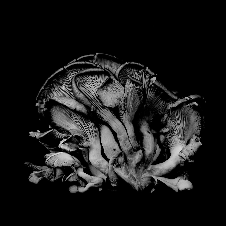 Dale M_Reid_Dejeuner_Oyster Mushroom 19_3.jpg