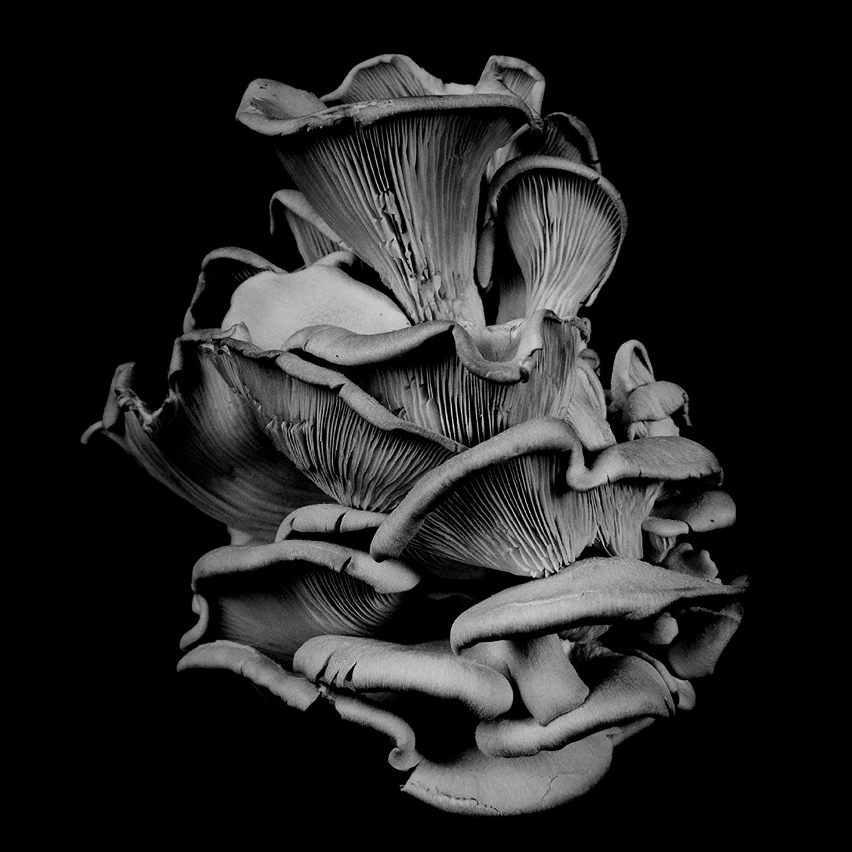 Dale M_Reid_Dejeuner_Oyster Mushroom 17_2.jpg