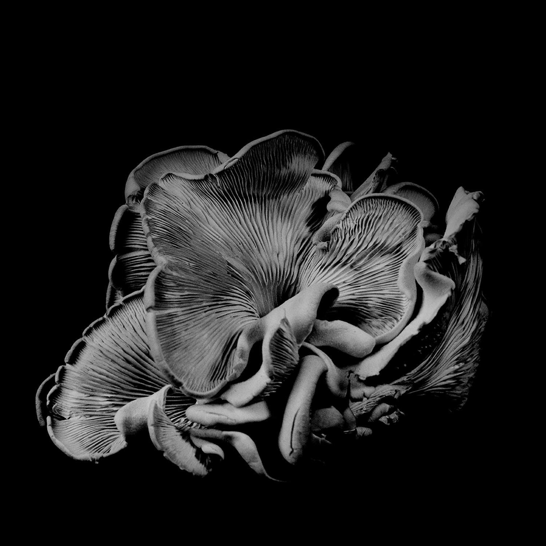 Dale M_Reid_Dejeuner_Oyster Mushroom 21_4.jpg