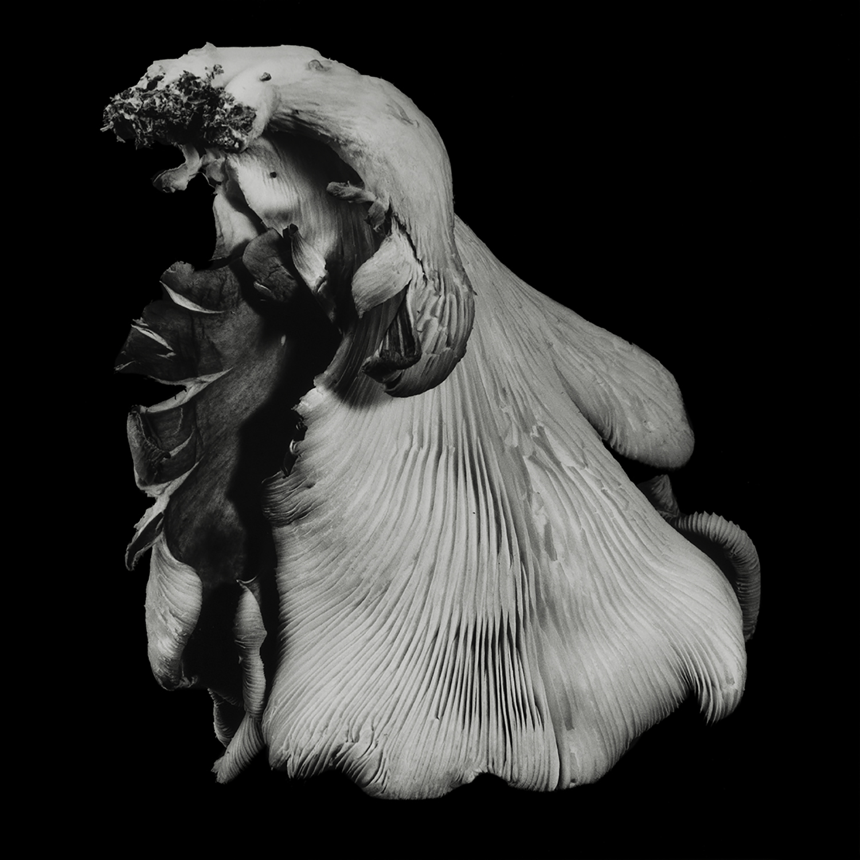 Dale M_Reid_Dejeuner_Oyster Mushroom 40_5.jpg