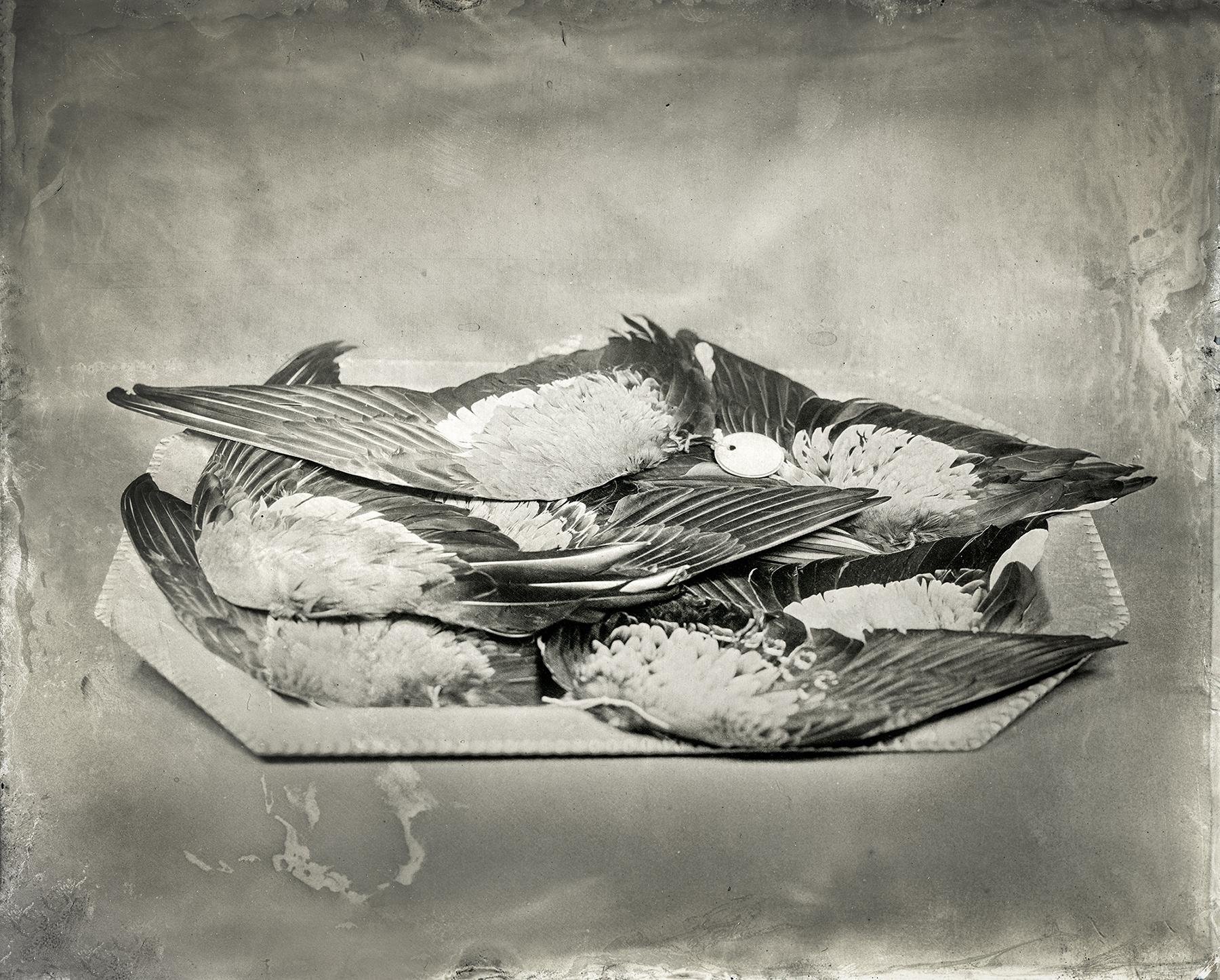 Christine_Fitzgerald_TRAFFICKED_Platter of Duck Wings_06.jpg
