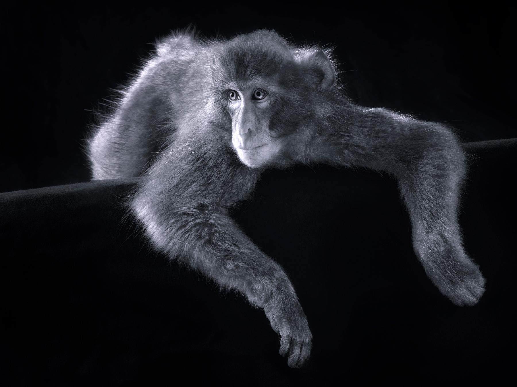 Lennette_Newell Snow_Monkey.jpg