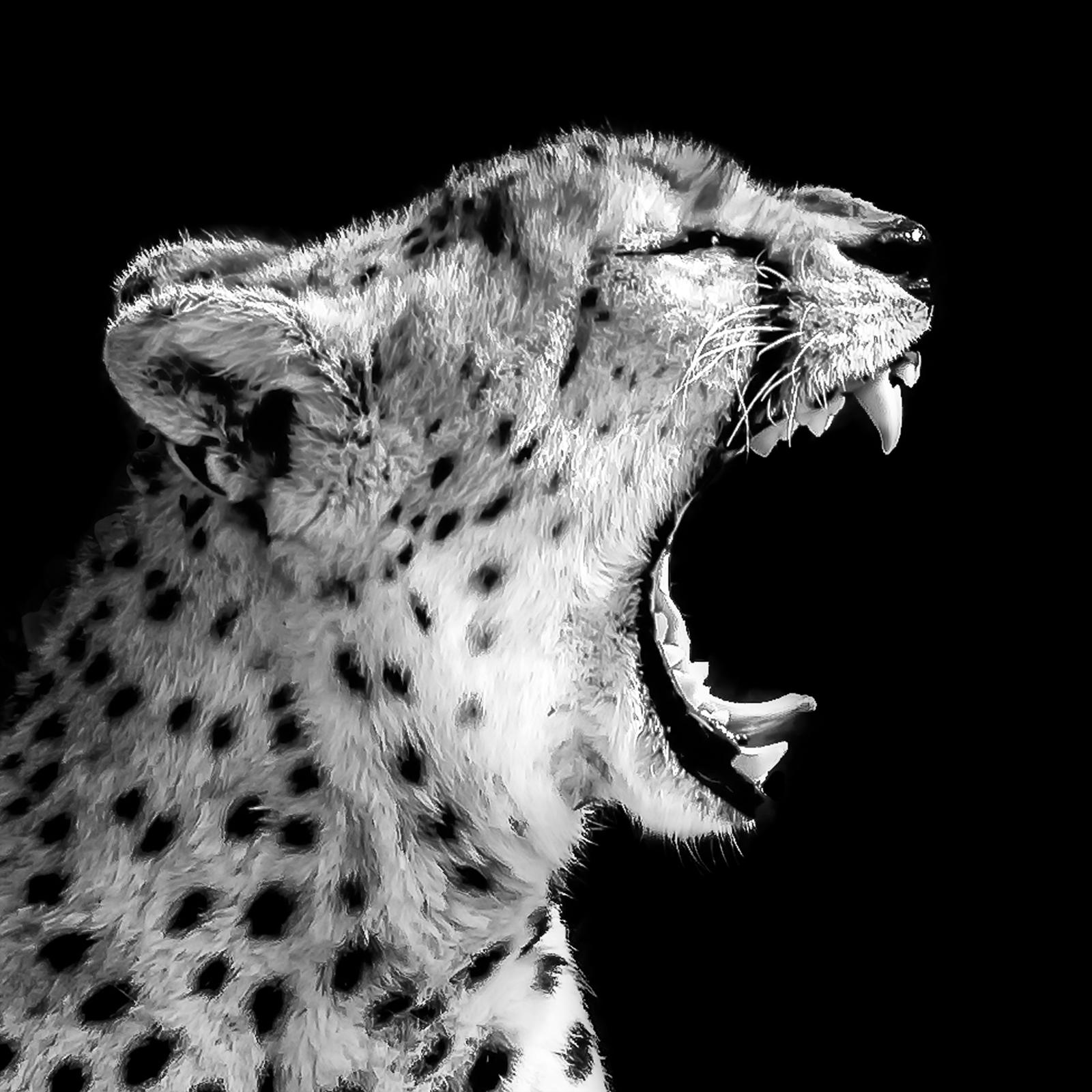 Julie_Eliason_Expressions_and_Impressions_Cheetah_Warning_06.jpg