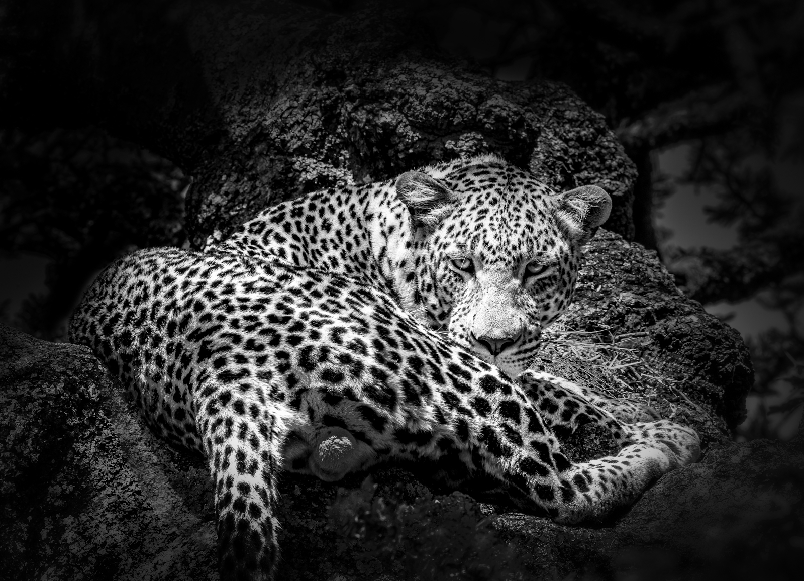 Julie_Eliason_Expressions_and_Impressions_Eyes_of_the_Leopard_02.jpg