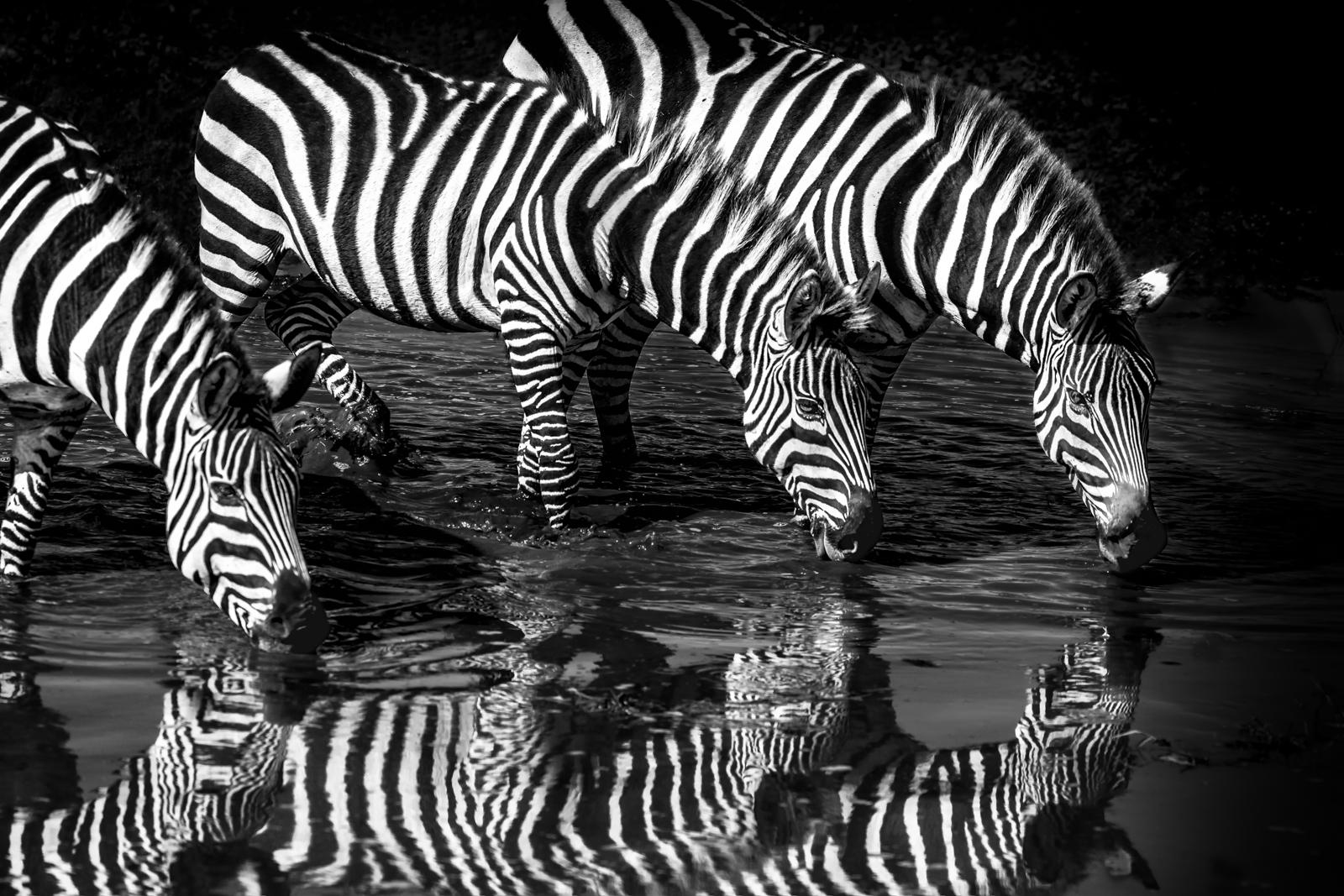 Julie_Eliason_Expressions_and_Impressions_Zebra_Reflection_05.jpg